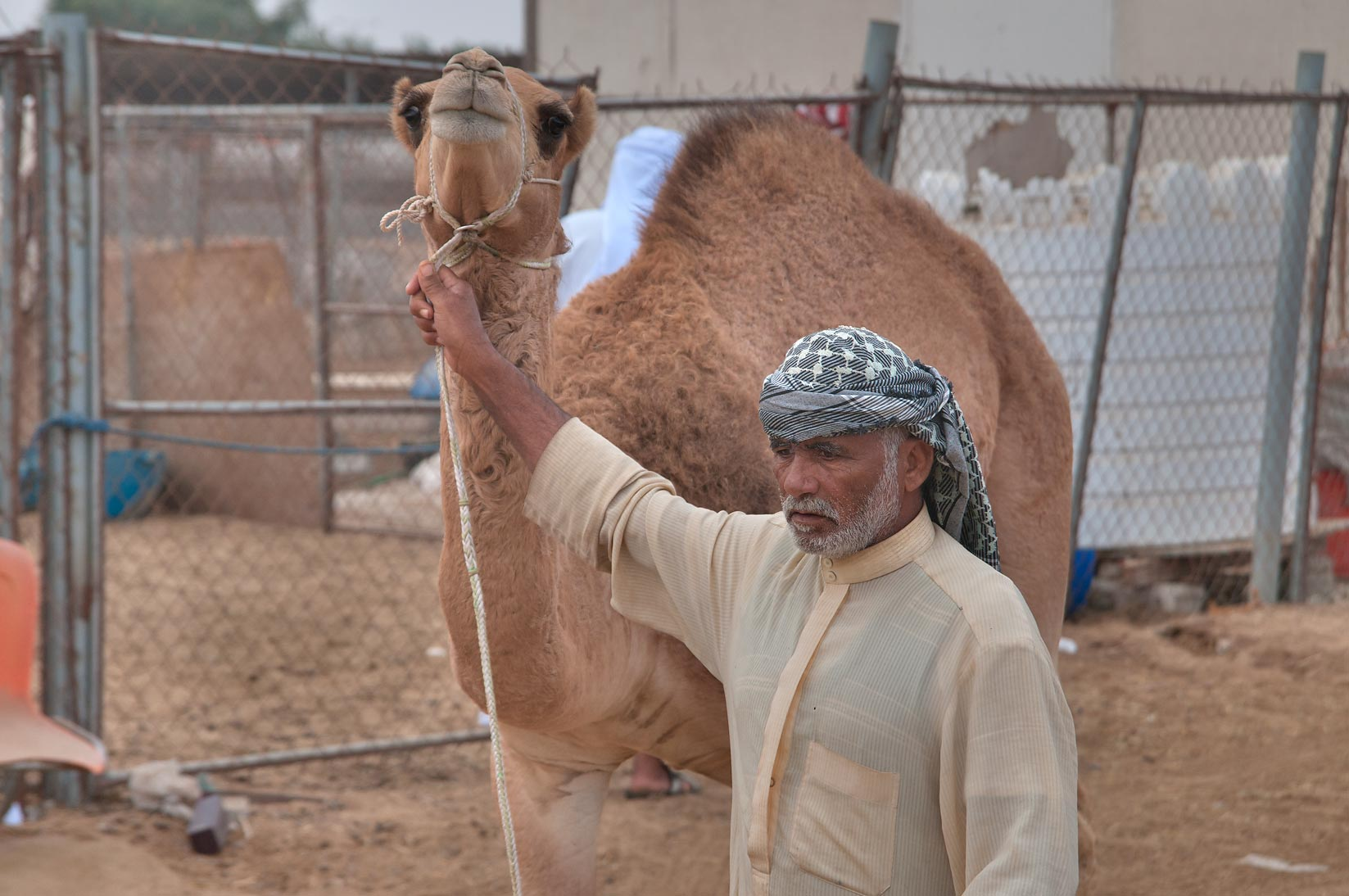 Animals keeper in Camel Market (Souq). Doha, Qatar