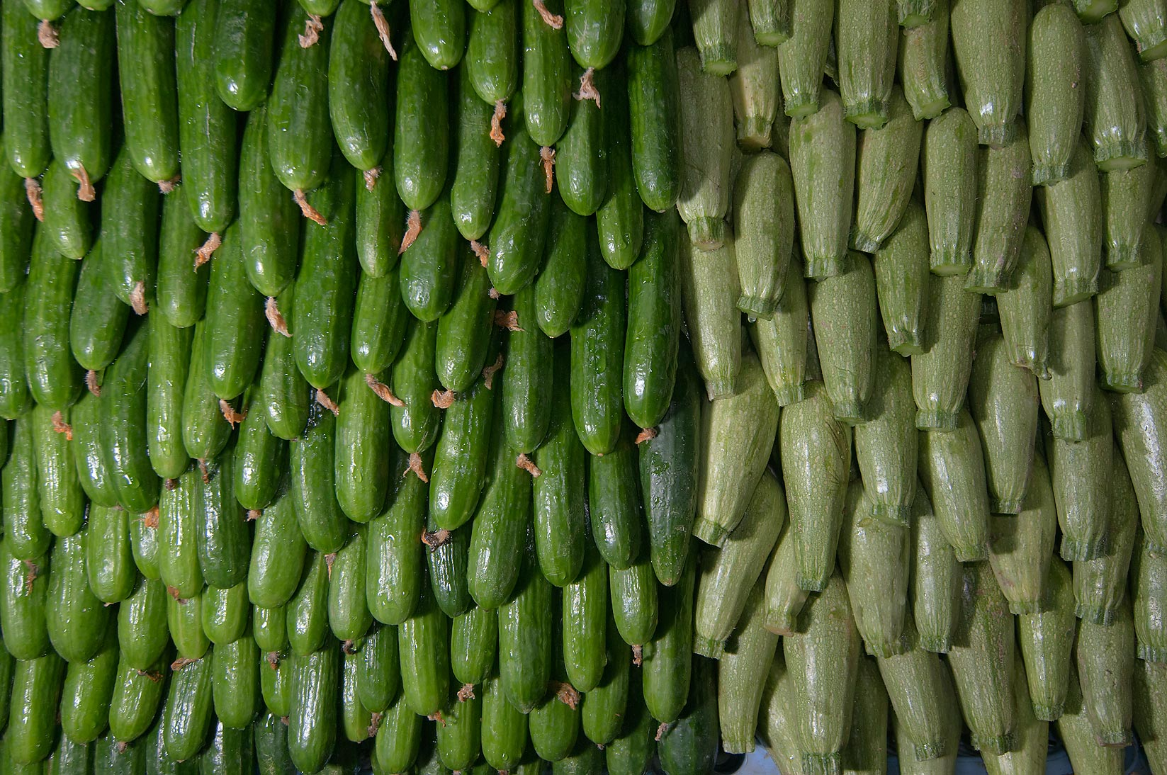 Masses of cucumbers in vegetable market. Doha, Qatar