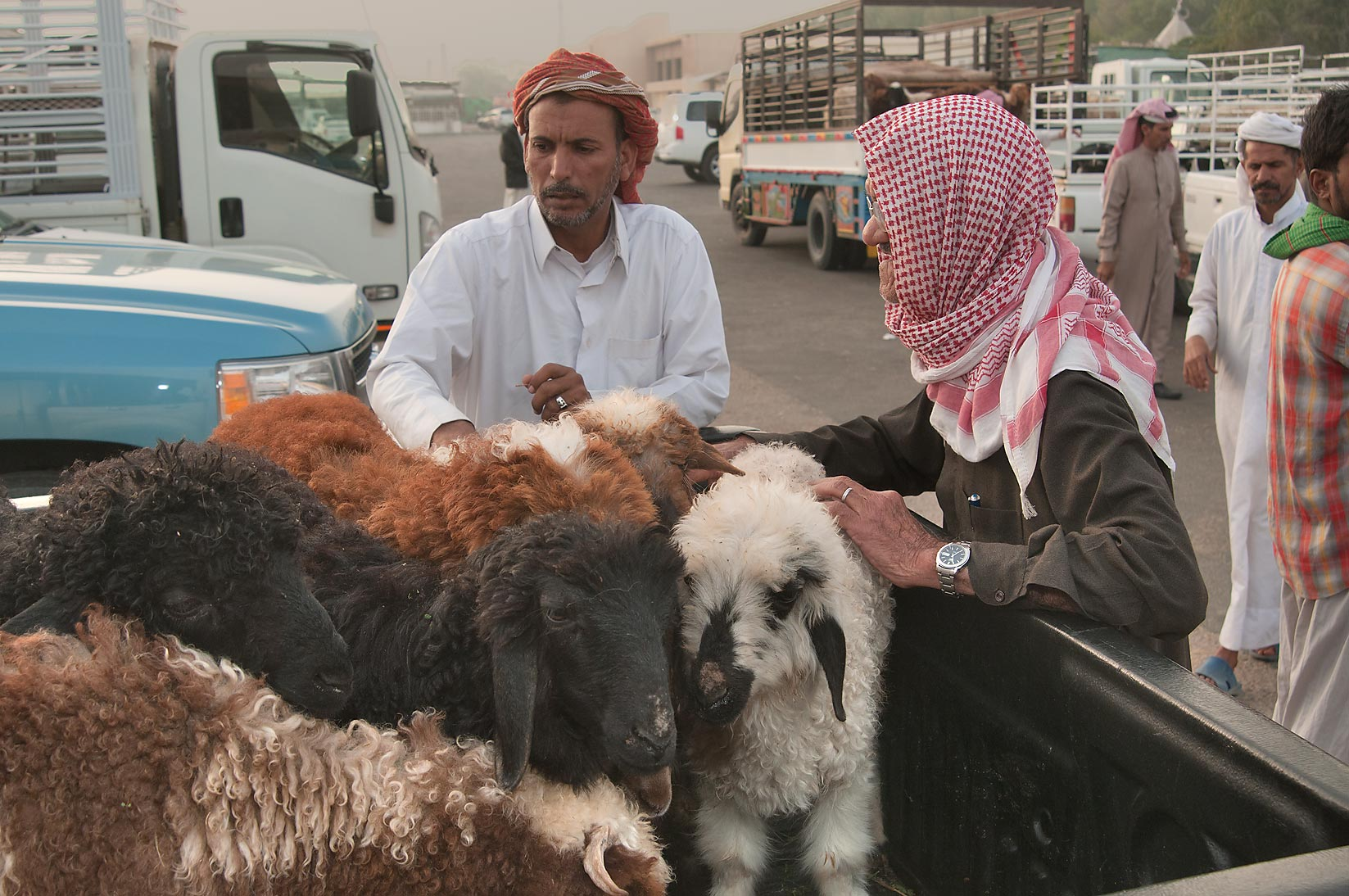 Selling sheep from a truck in Wholesale Animal Market. Doha, Qatar