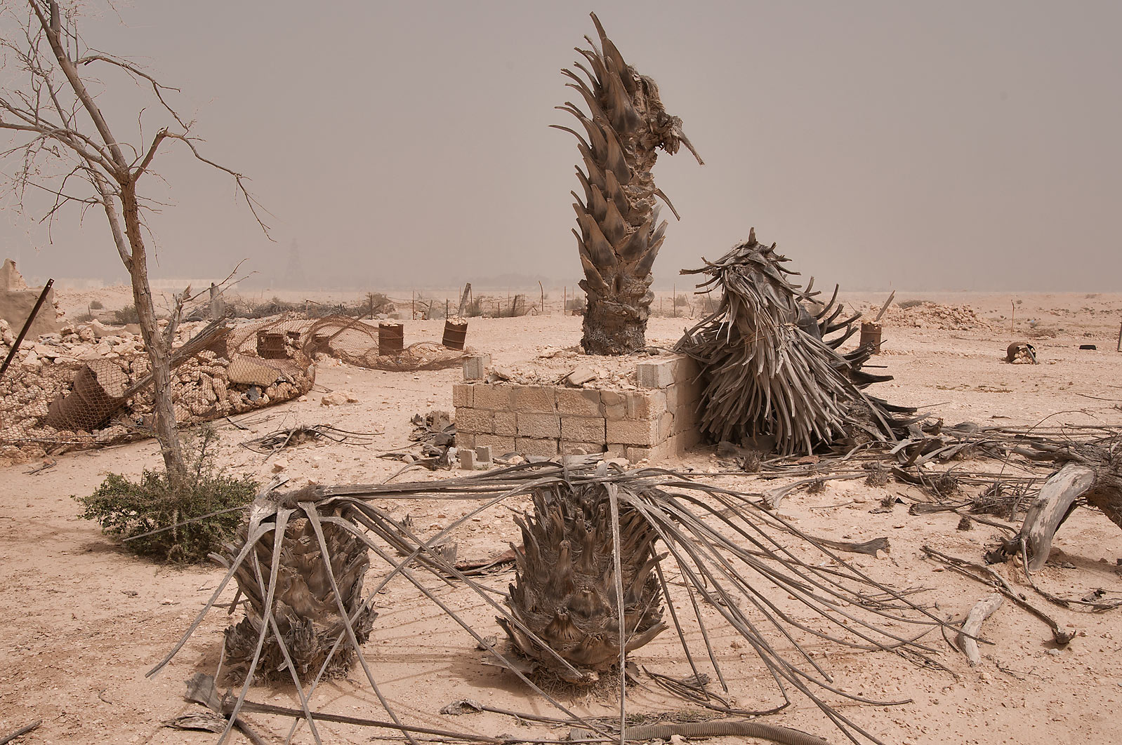 Ruins of old village of Jamilla in Al-Jumayliyah (Aljumileh). Qatar