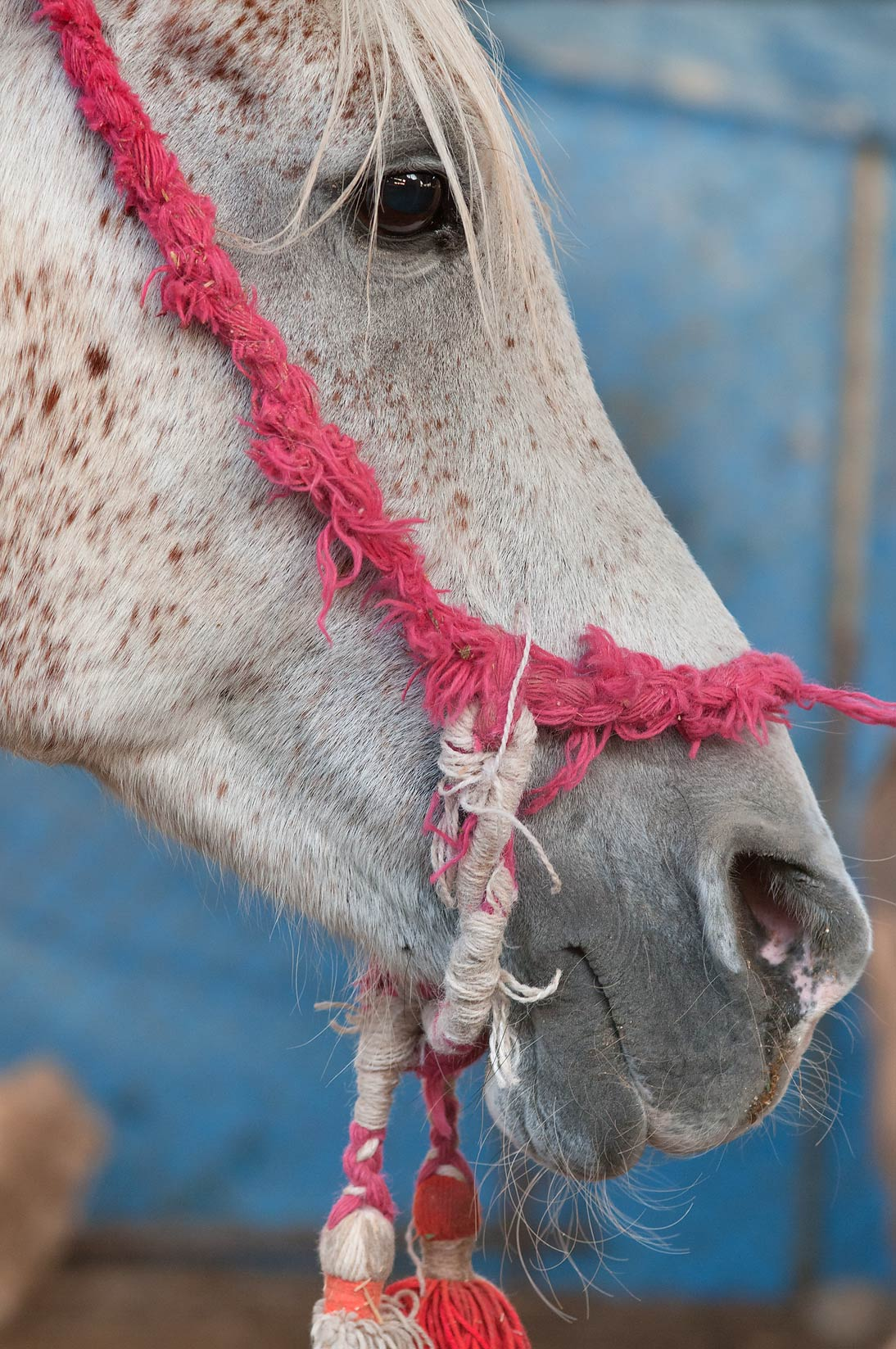 Horse in a pen in Animal Market, Wholesale Markets area. Doha, Qatar
