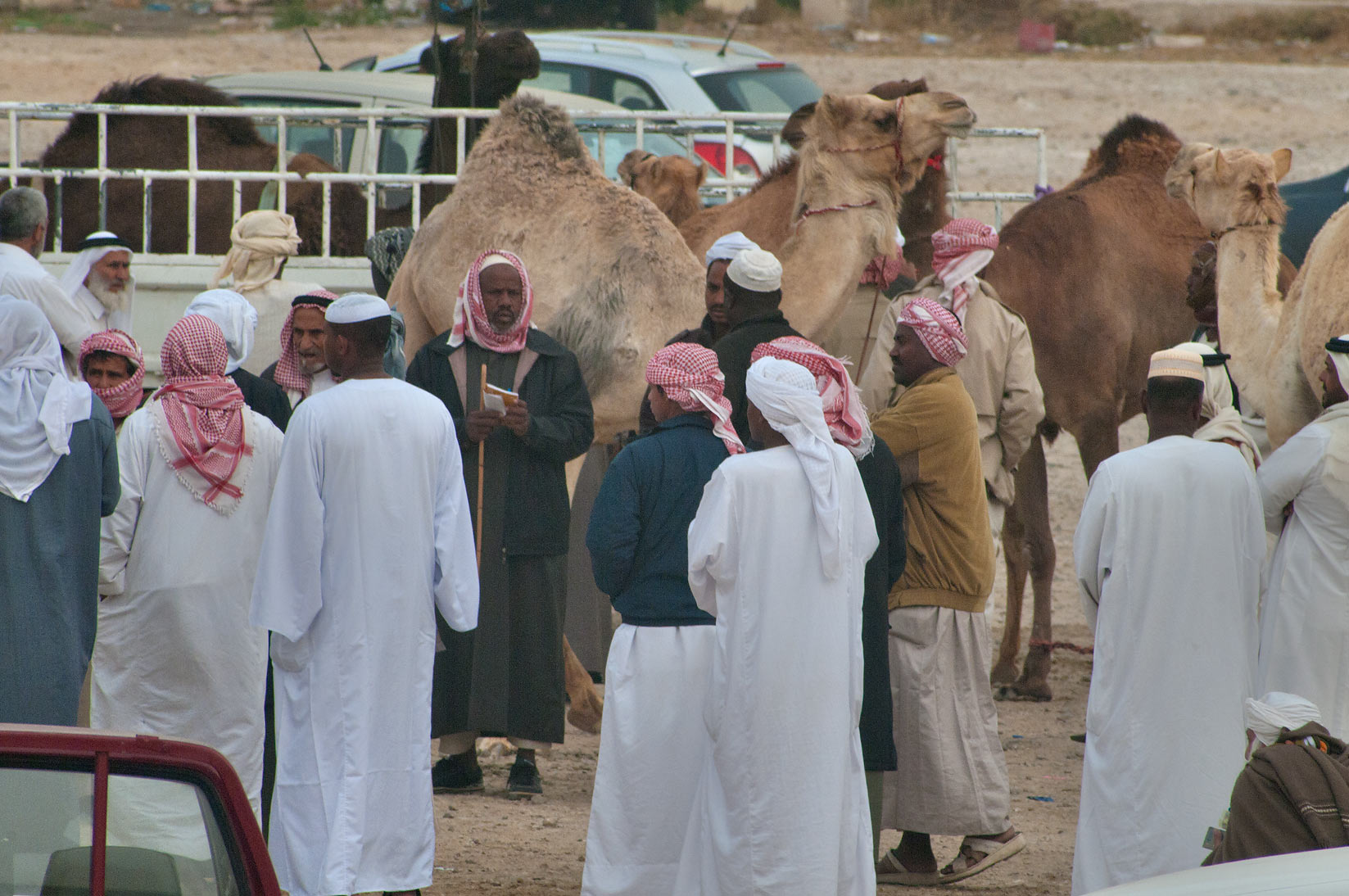 People gathering in racing section of Camel Market, wholesale markets area. Doha, Qatar