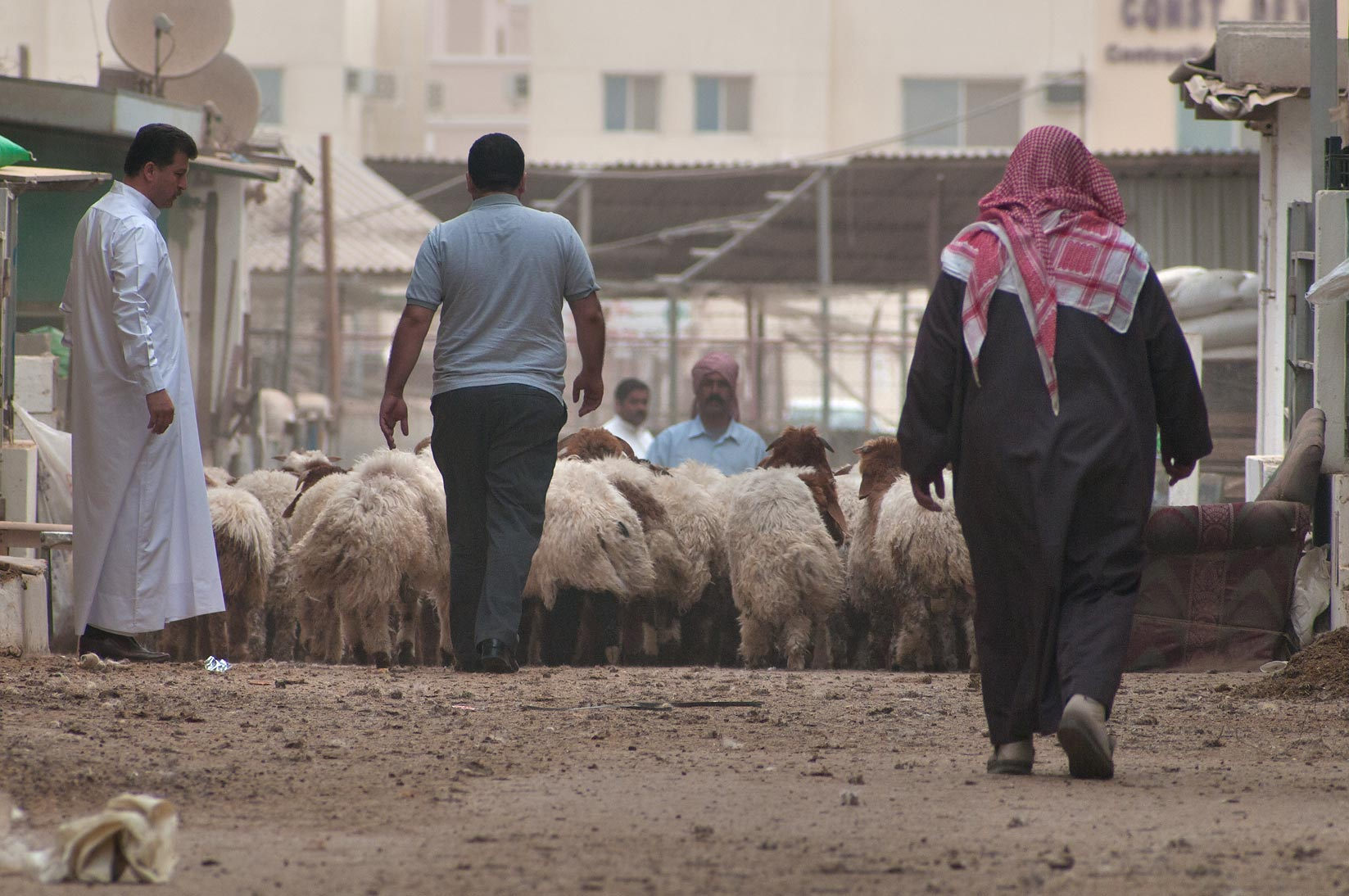 Directing a sheep herd in Animal Market, Wholesale Markets area. Doha, Qatar