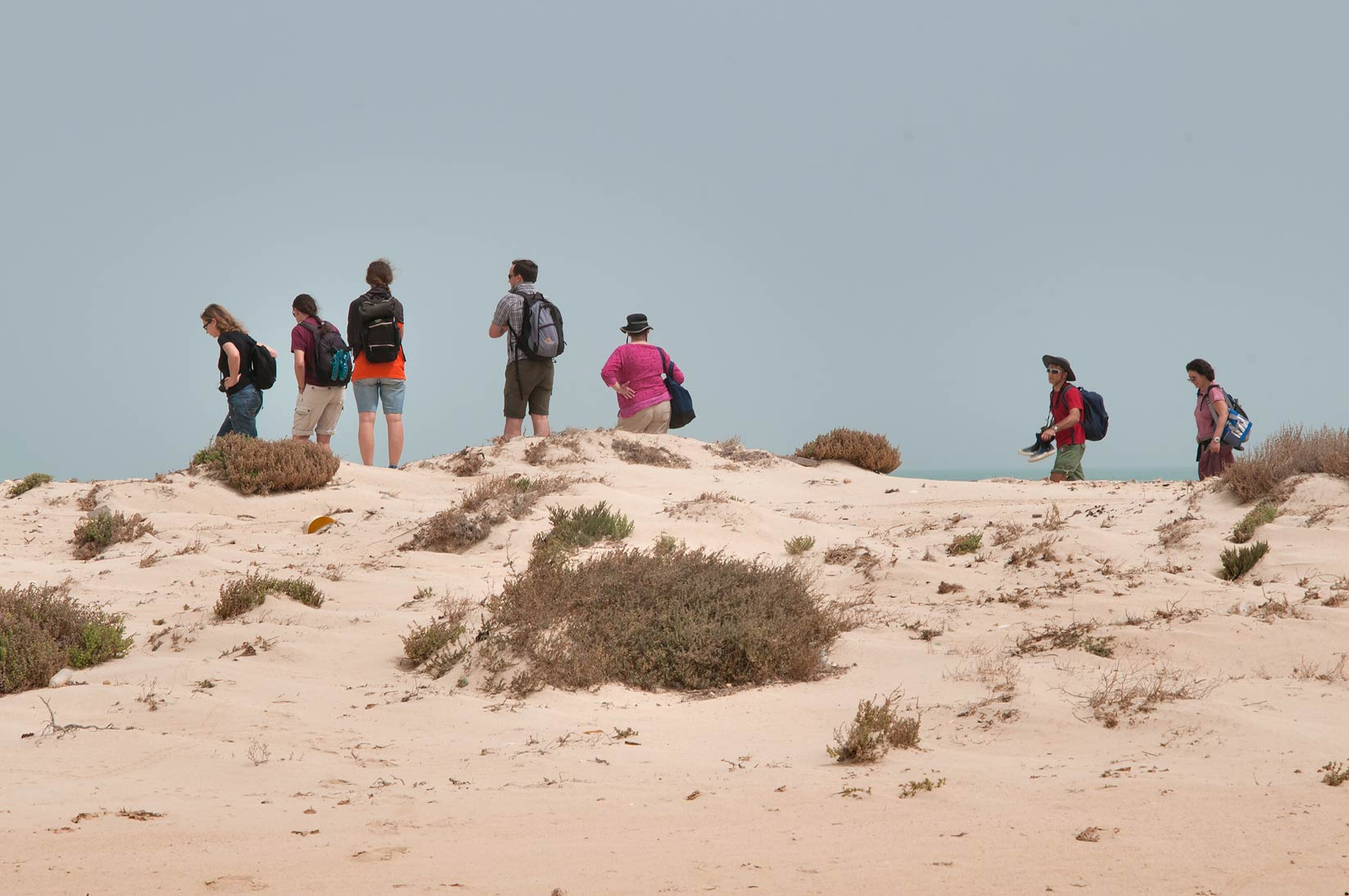 Qatar Natural History Group (QNHG) on dunes of...tip of Qatar, east from Ruwais