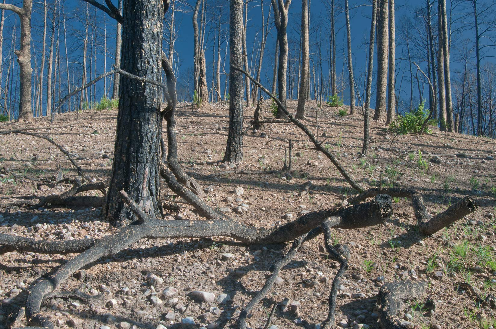 Burnt hill in Bastrop State Park. Bastrop, Texas