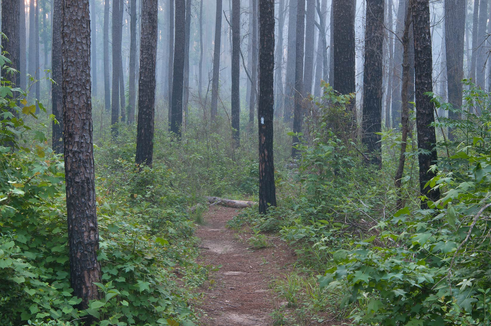 Lone Star Hiking Trail with smoke from prescribed...near Rd. FM 1375. Huntsville, Texas