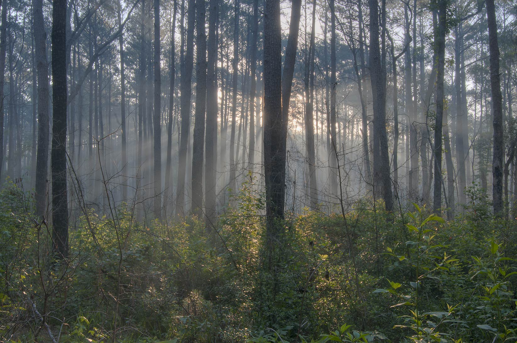 Sunrise from Lone Star Hiking Trail through smoke...near Rd. FM 1375. Huntsville, Texas