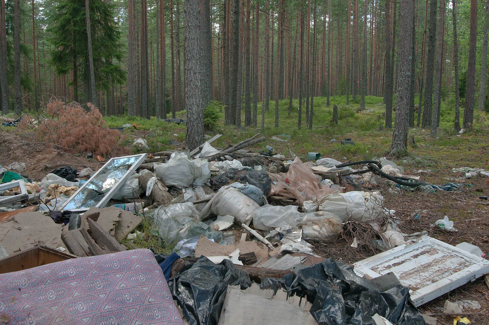 Dumping area in a forest near 67 Kilometr south...miles north from St.Petersburg. Russia