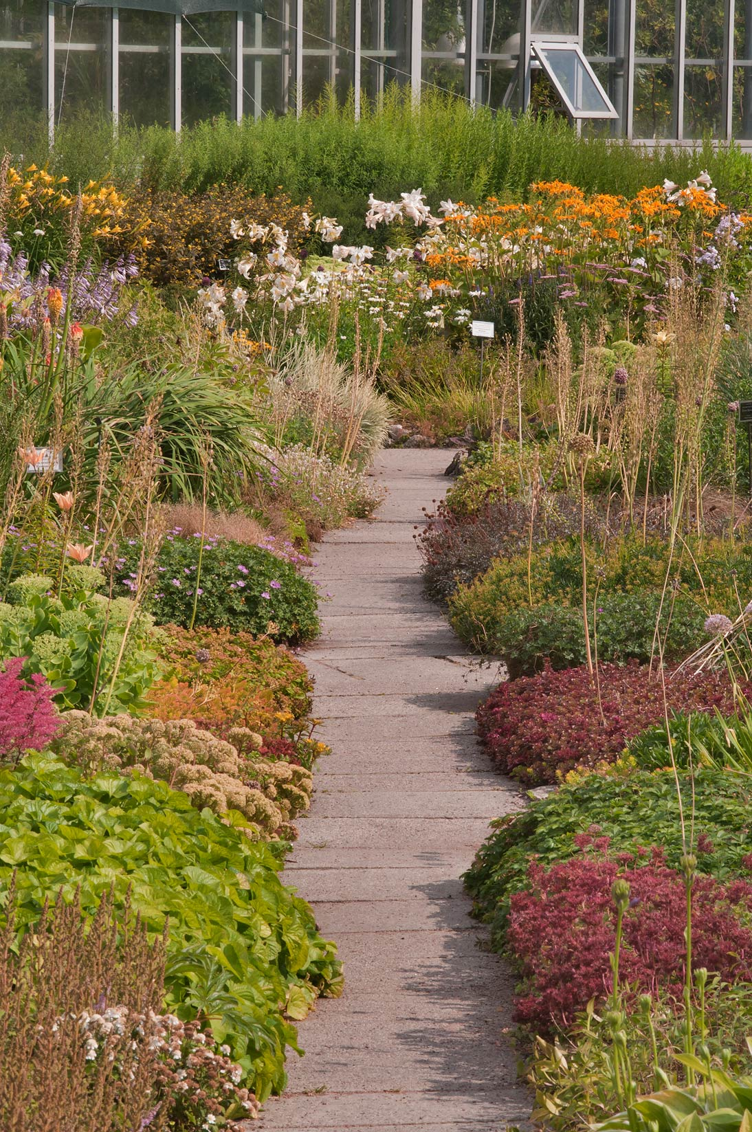 Path through flower beds in Botanic Gardens of...Institute. St.Petersburg, Russia