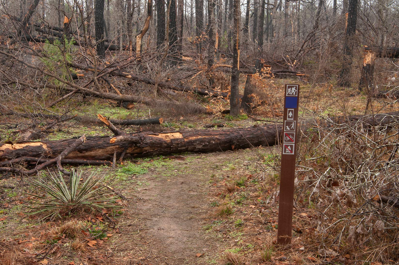Blue marker of Lost Pines Trail in Bastrop State Park. Bastrop, Texas