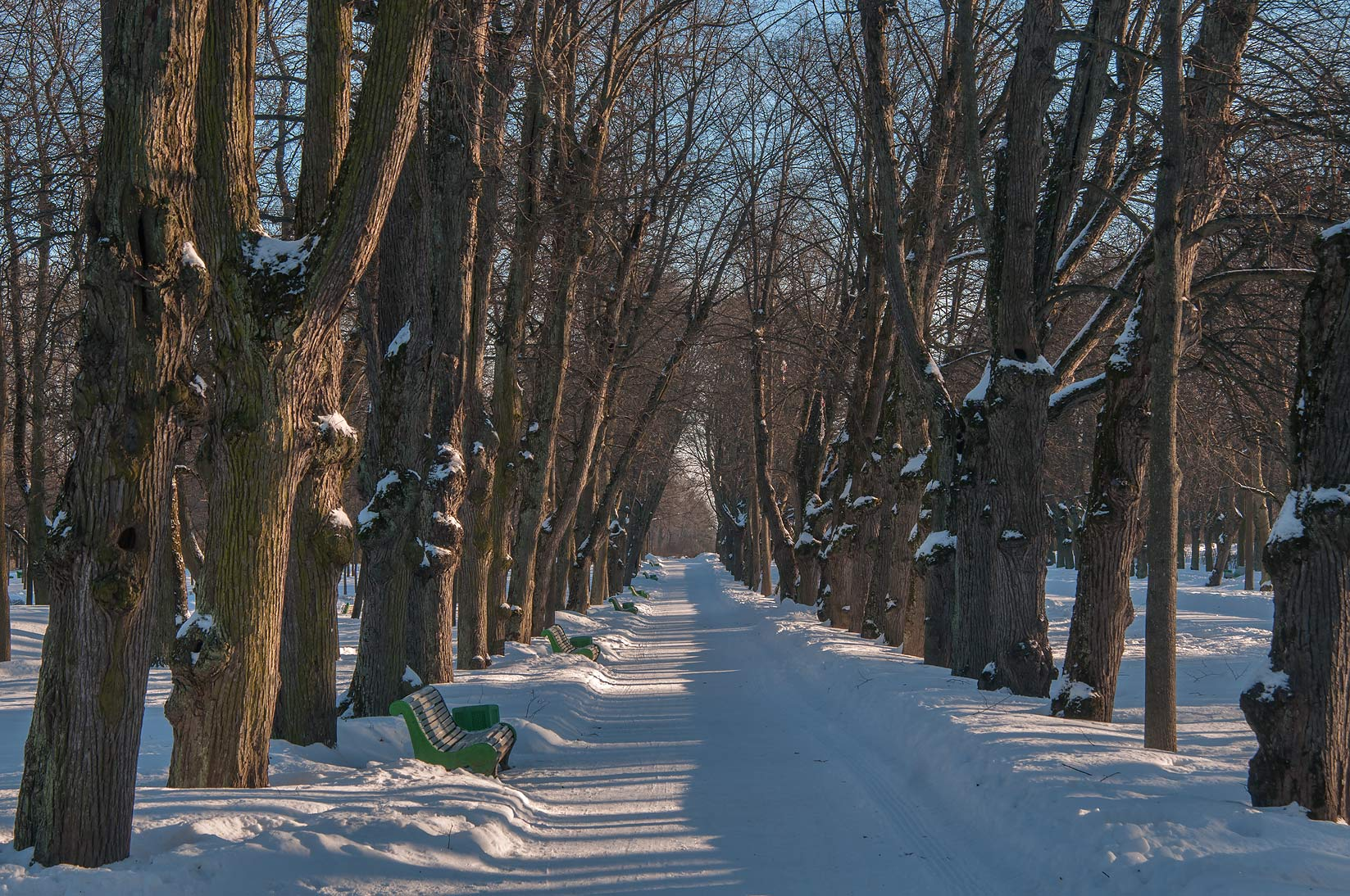 Linden alley opposite to Pavlovsky Palace. Pavlovsk, a suburb of St.Petersburg, Russia