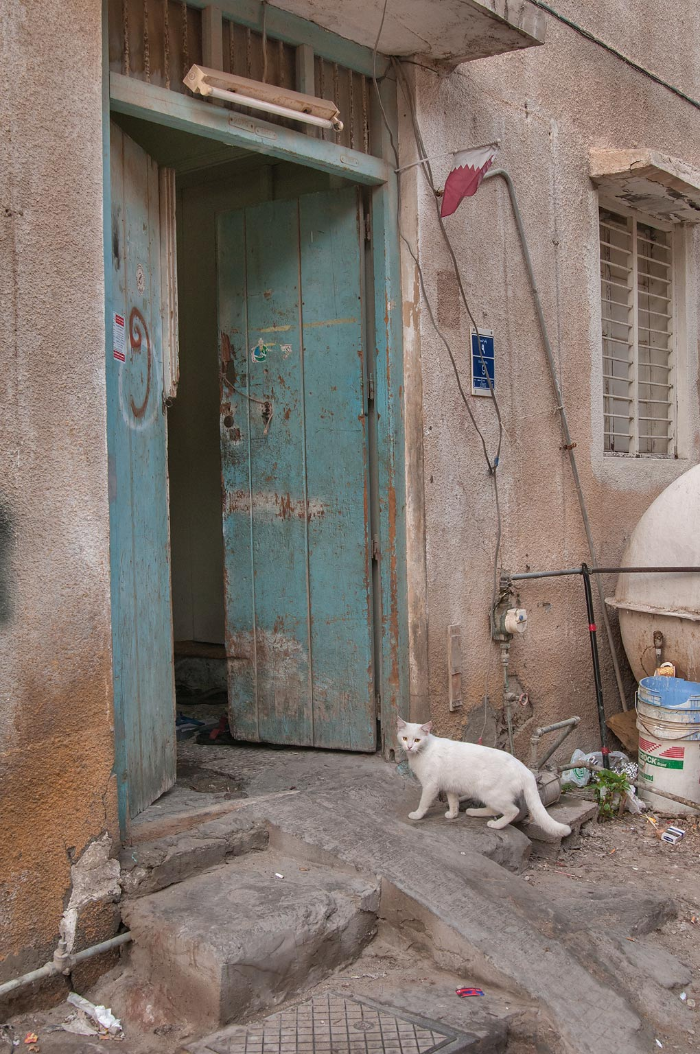 White cat near Al Jassasiya St., Musheirib area. Doha, Qatar