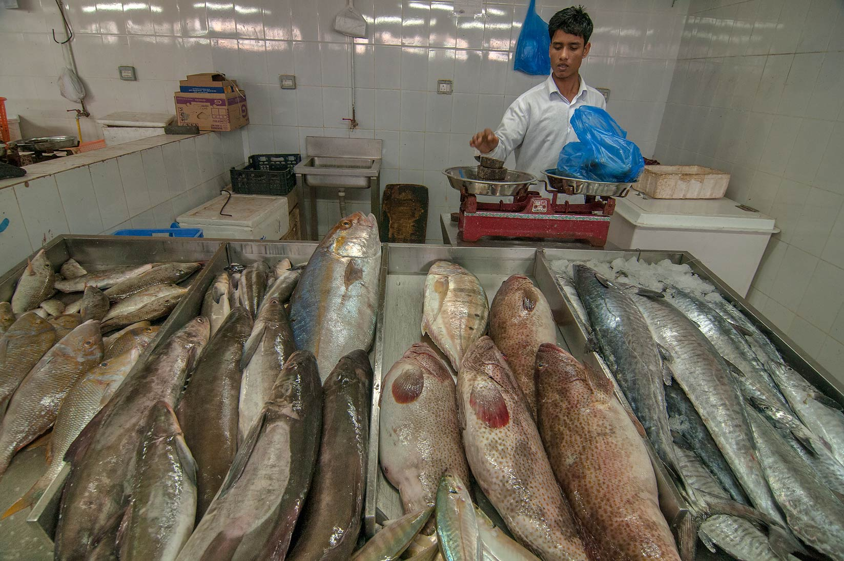 Weighting fish in Wholesale Fish Market. Doha, Qatar