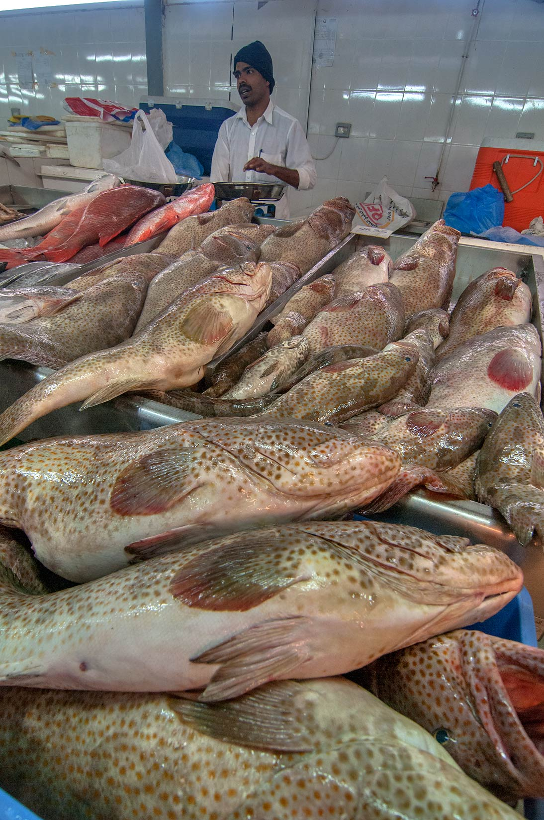 Masses of brown spotted grouper (Hamour...Market, Abu Hamour area. Doha, Qatar