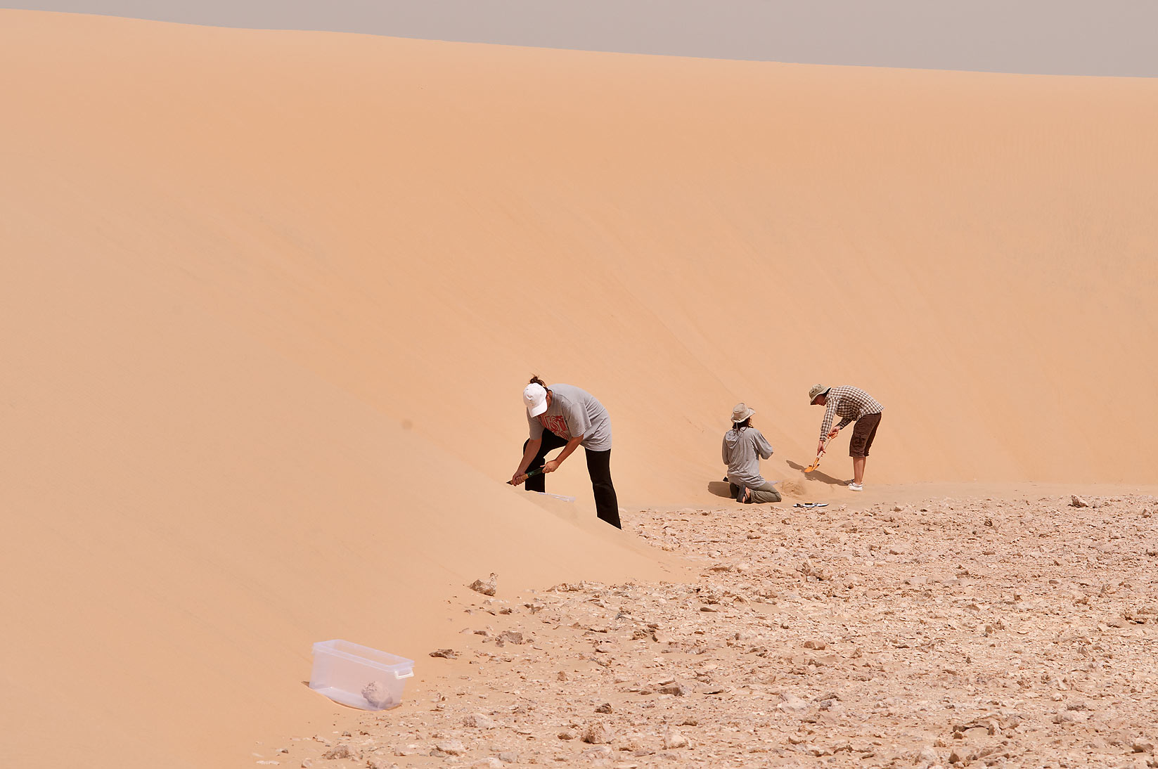 Placing pitfall traps in sand at the foot of a...Mesayeed, south-west from Doha. Qatar