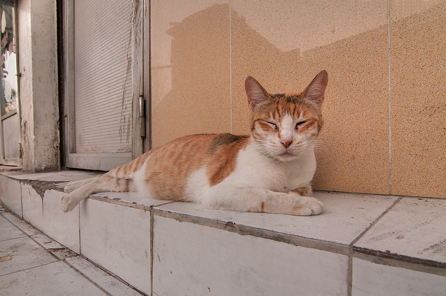 Bicolor arabian mau cat sleeping on above ground...St., Musheirib area. Doha, Qatar