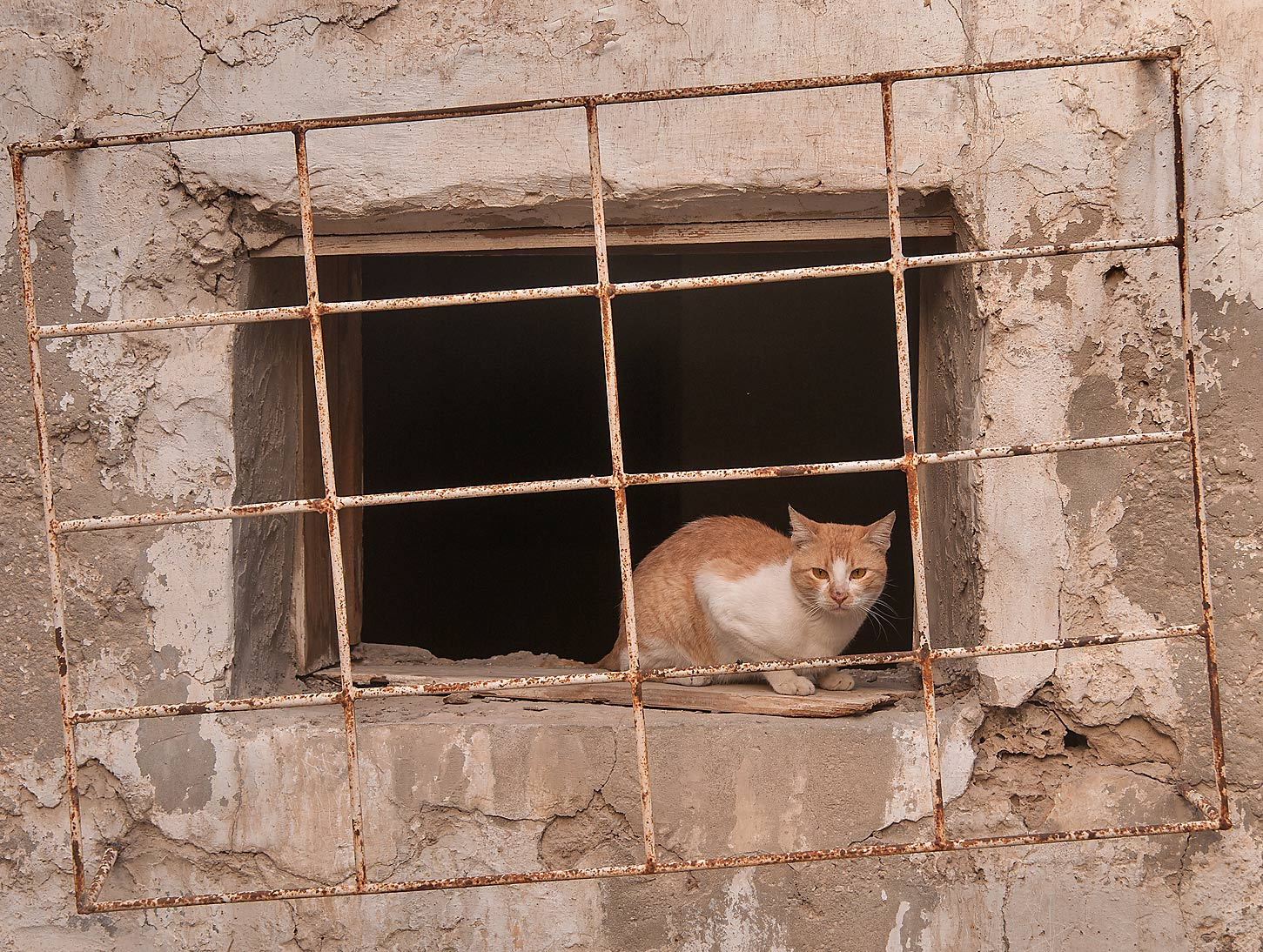 Stray cat sitting in window near Abdullah Bin Thani St., Musheirib area. Doha, Qatar