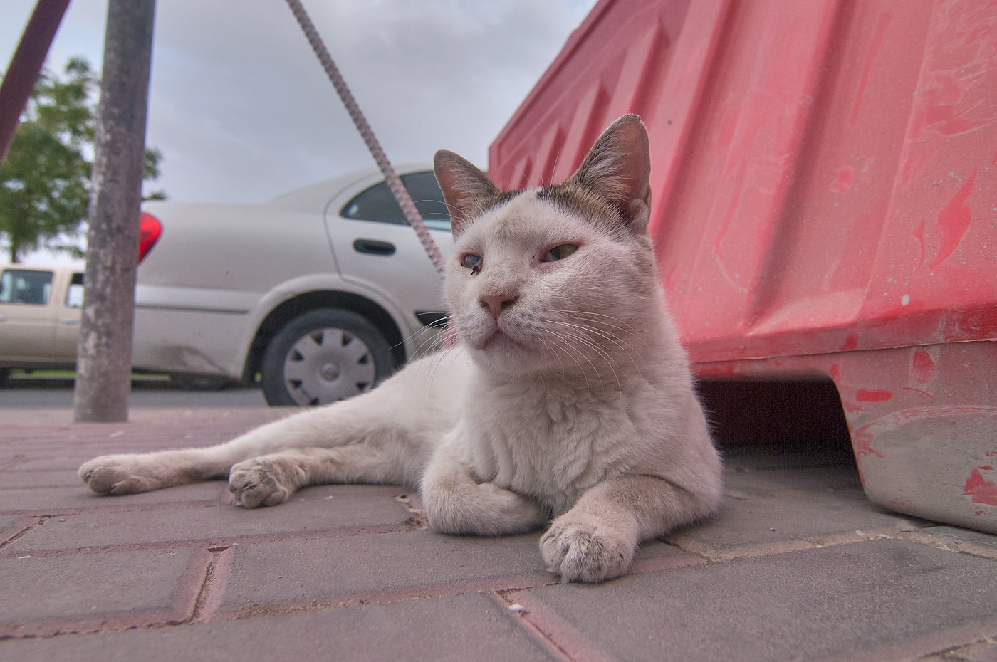 Cat resting near entrance of Fish Market...area in Abu Hamour. Doha, Qatar
