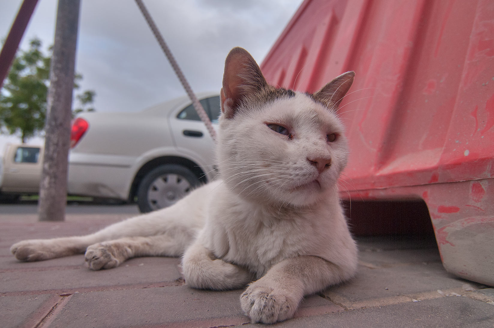 Cat stretched near entrance of Fish Market...area in Abu Hamour. Doha, Qatar