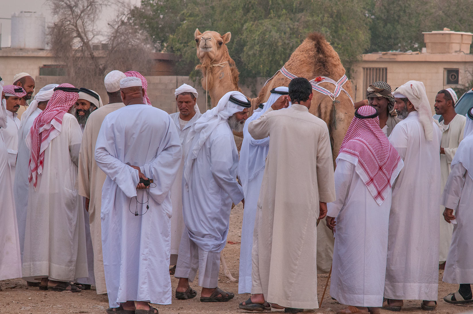 People meeting for camel shopping in livestock market, Abu Hamour area. Doha, Qatar
