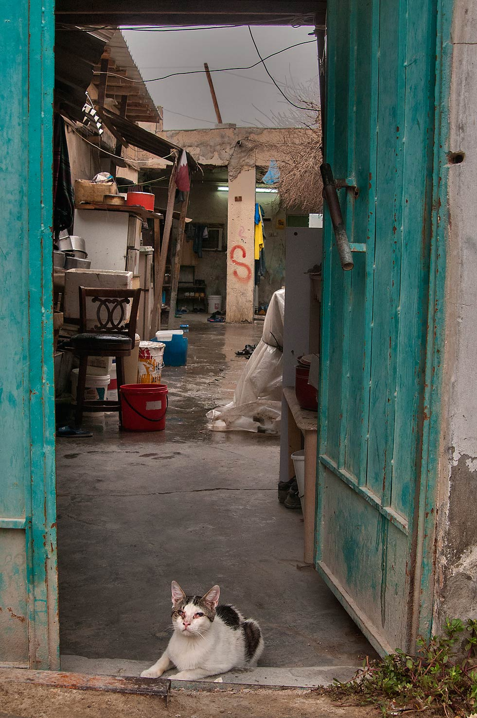 Blind cat sitting at a doorway on Sikkat Abu Thila, Musheirib area. Doha, Qatar