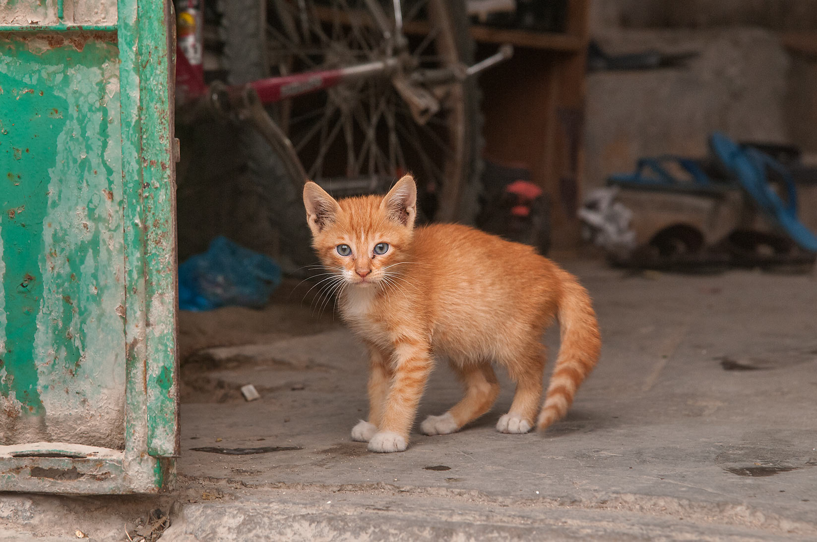 Brown kitten in a doorway at Al Jassasiya St., Musheirib area. Doha, Qatar