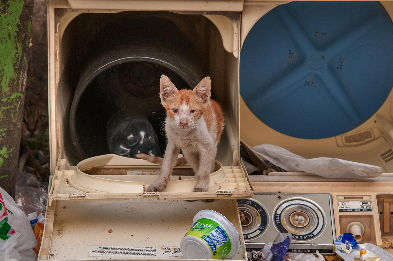 Kitten living in a disposed washing machine at Sikkat Al Hanan, Najma area. Doha, Qatar