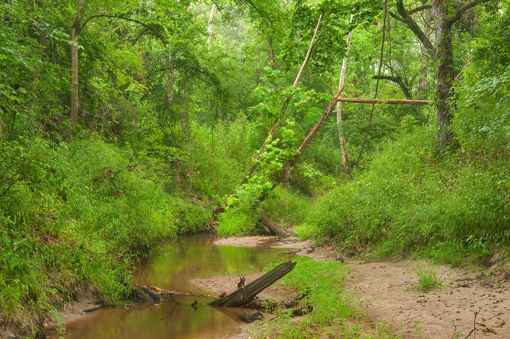 Lick Creek near Iron Bridge Trail near Racoon Run...Creek Park. College Station, Texas