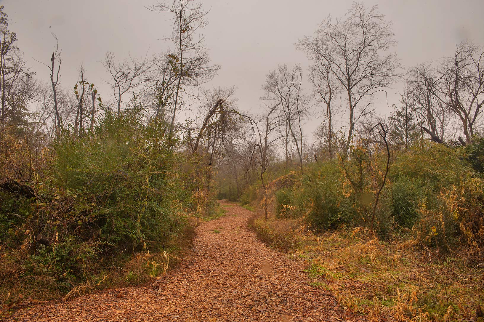 Unkempt trail in Bee Creek Park at rain. College Station, Texas