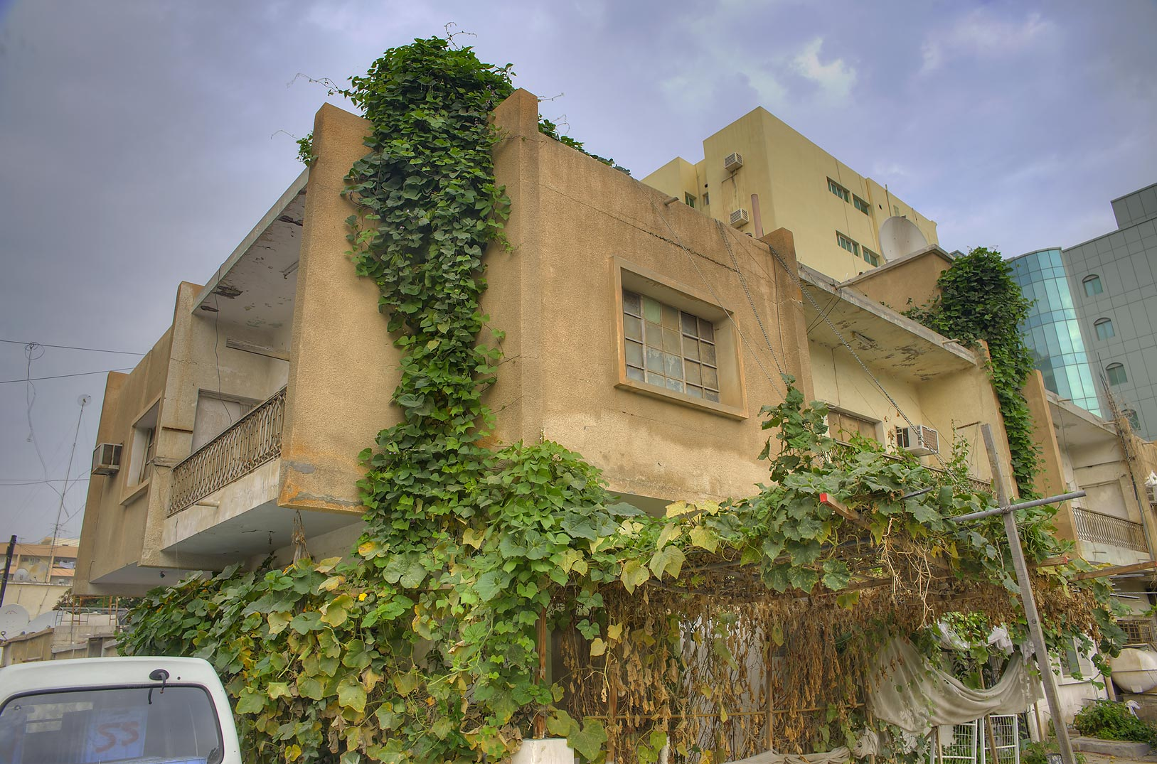 Climbing dishrag gourd (Luffa cylindrica) at a...Al Jadeeda neighborhood. Doha, Qatar
