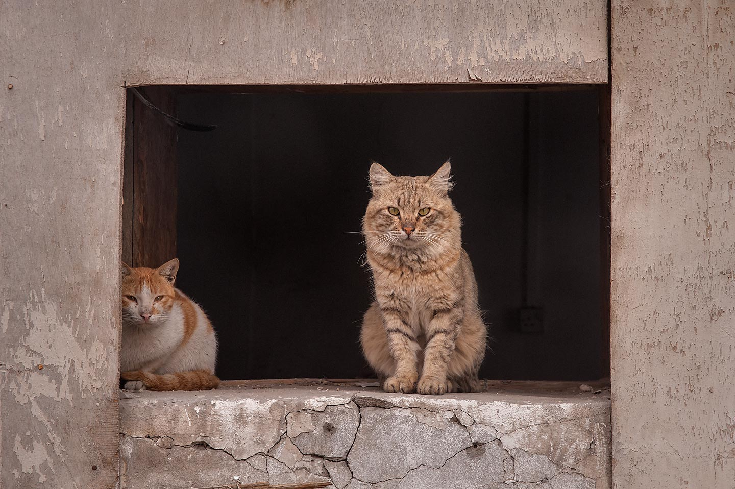Two cats in a window at Zurara Bin Amir St. in Al...Al Jadeeda neighborhood. Doha, Qatar