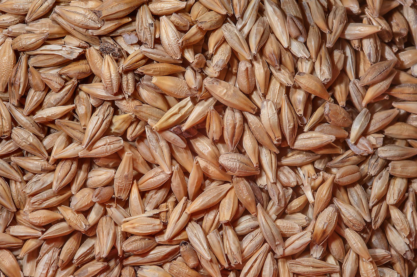 Wheat seeds for sale in spice section of Souq Waqif (Old Market). Doha, Qatar