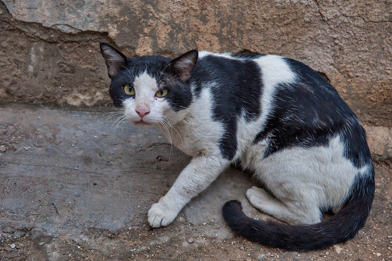 Suspicious black and white cat near Abdullah Bin Thani St. in Musheirib area. Doha, Qatar