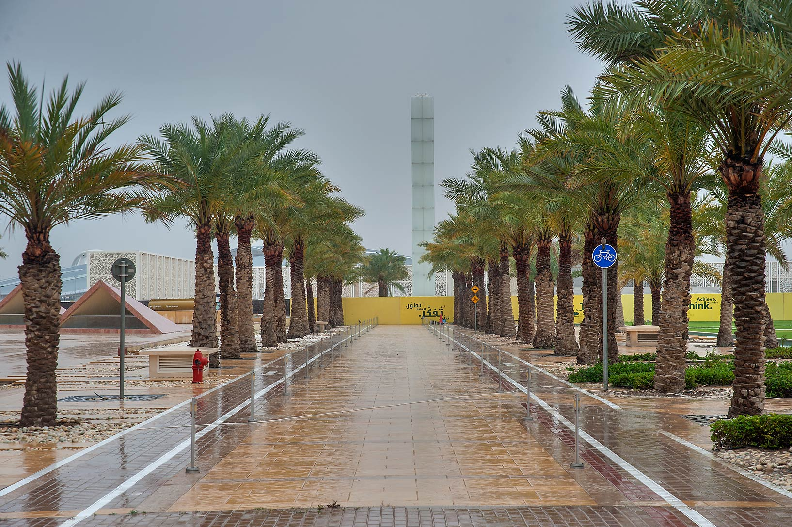 Palm alley near back entrance of Texas A&M...in Education City campus. Doha, Qatar