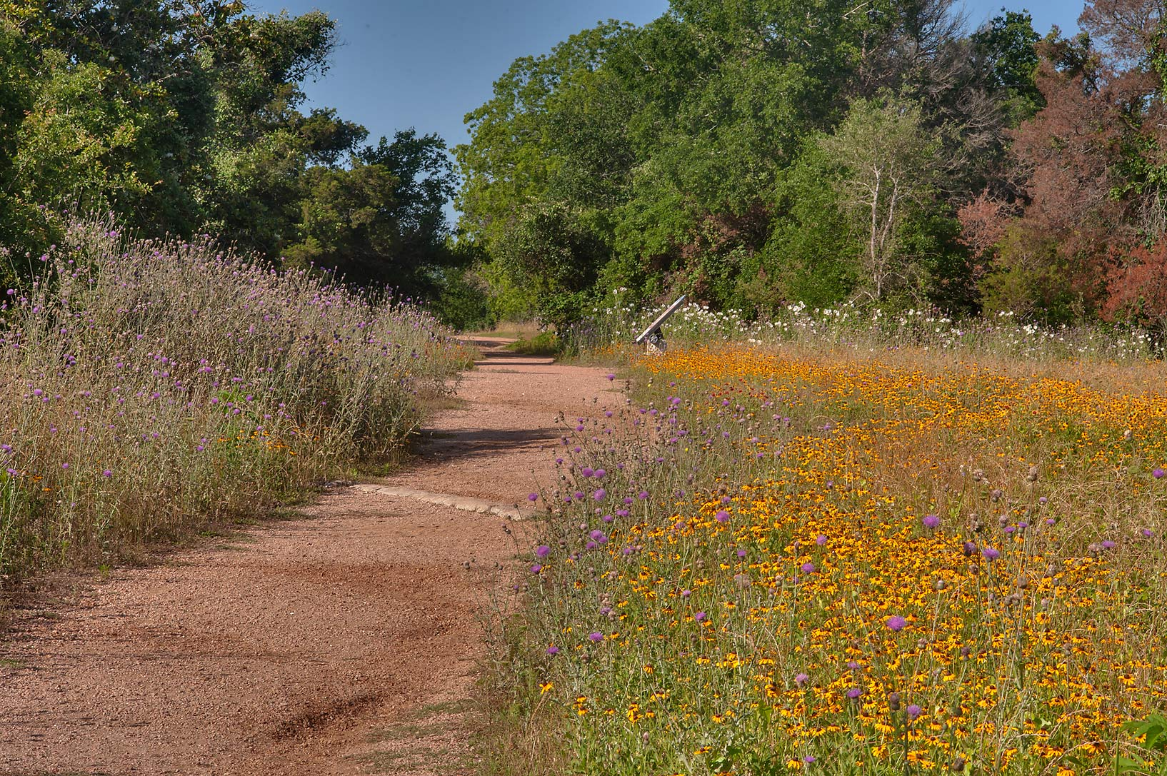 Ferry Rd. with yellow flowers in Washington-on...State Historic Site. Washington, Texas