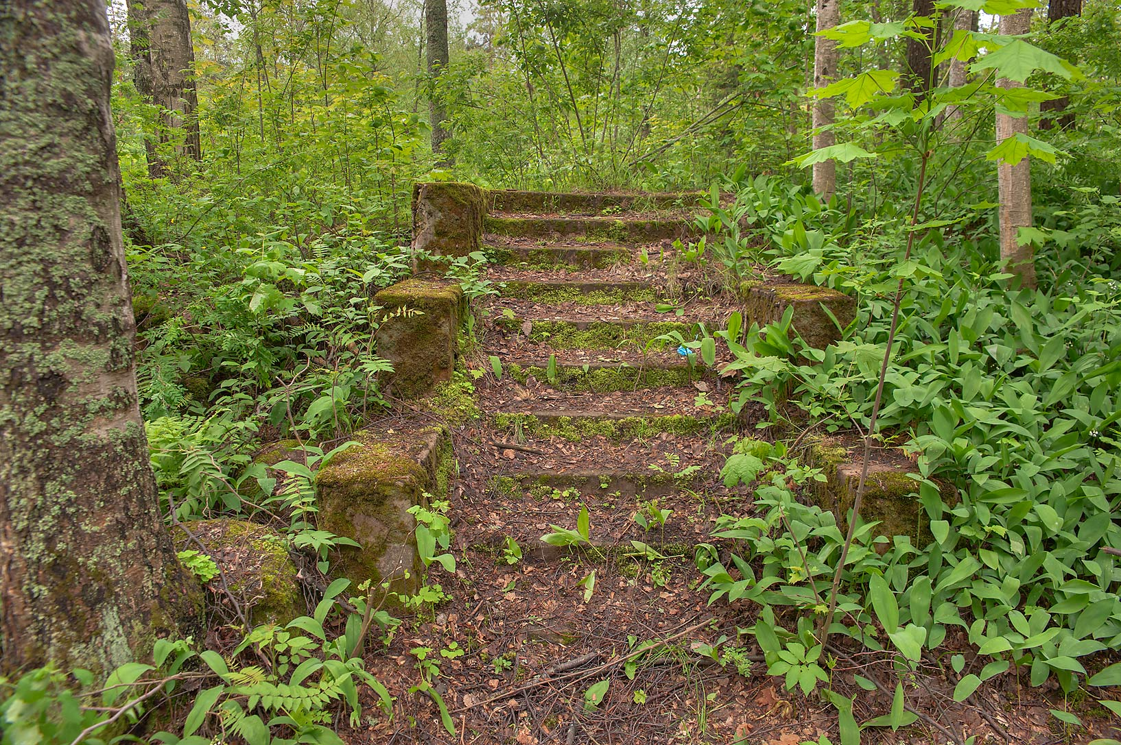 Old stone steps near Primorsky Highway. Solnechnoe, suburb of St.Petersburg, Russia