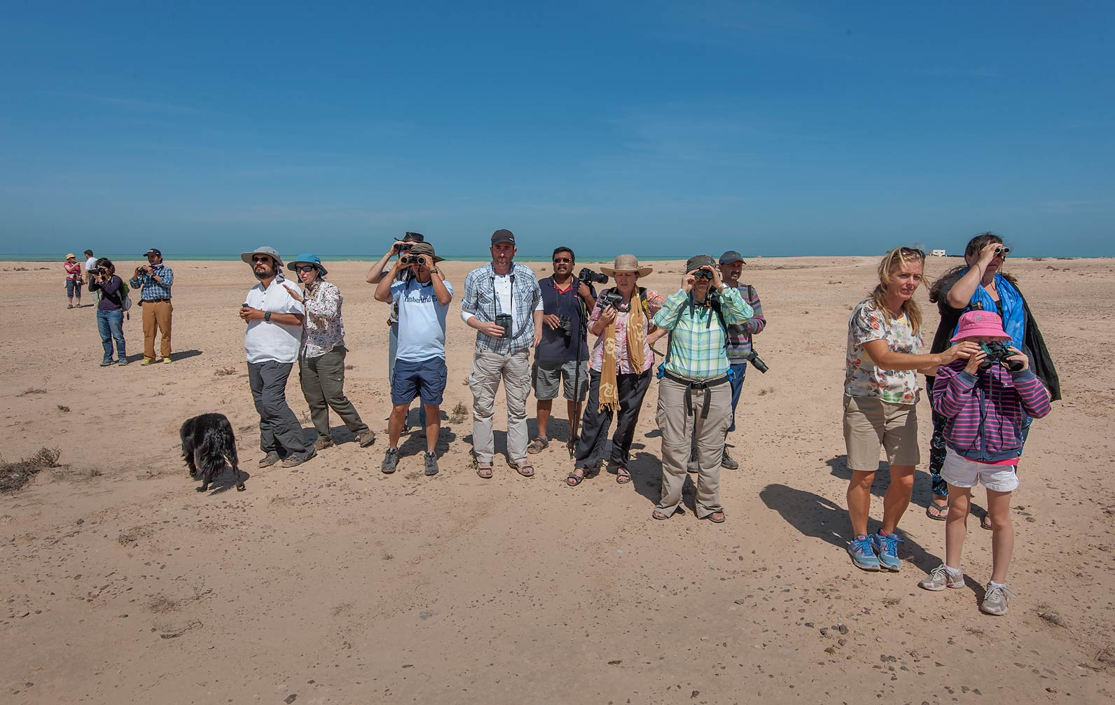 QNHG (Qatar Natural History Group) watching birds...peninsula. Ruwais, Northern Qatar