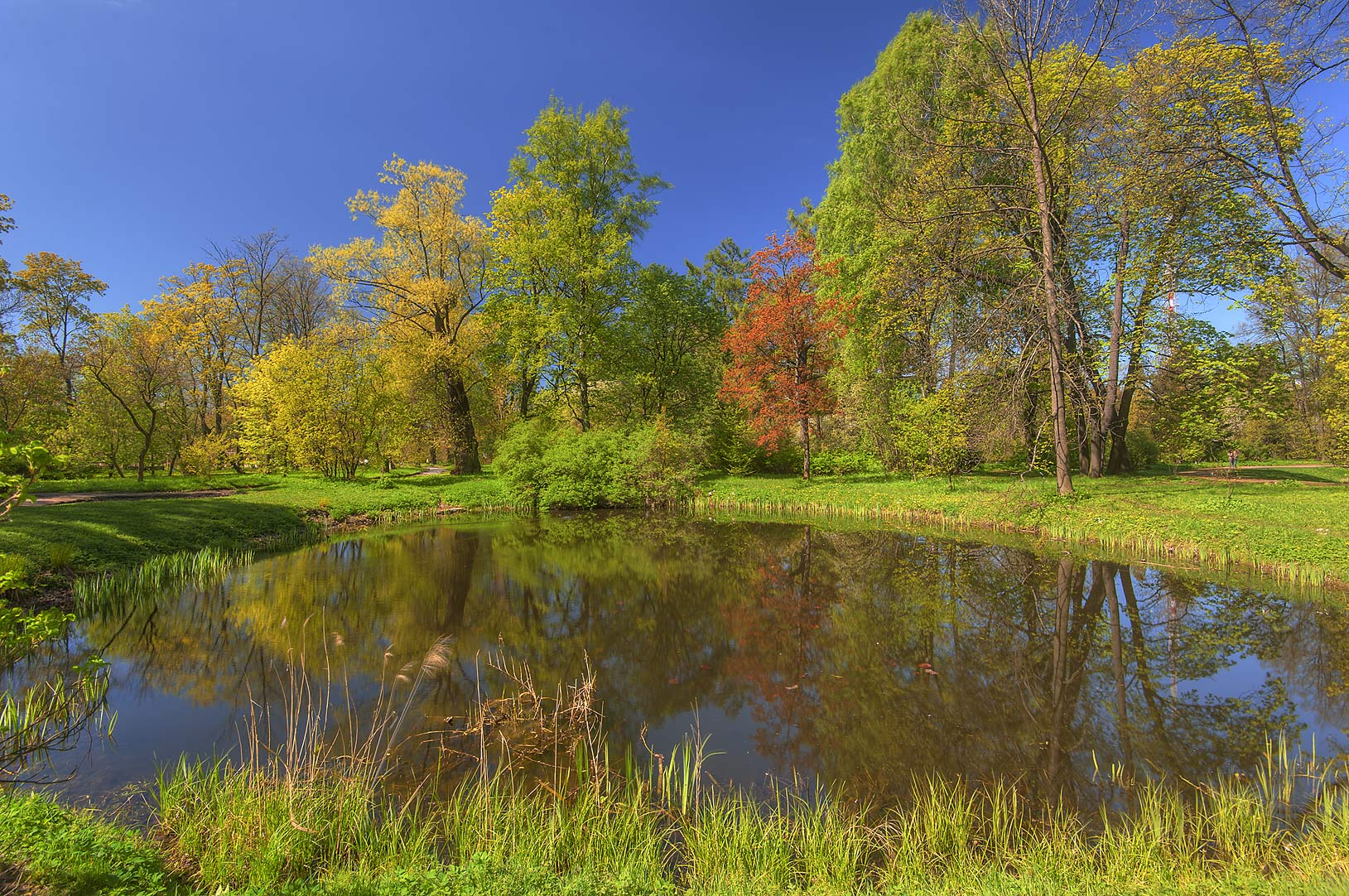 Round pond in Botanic Gardens of Komarov Botanical Institute. St.Petersburg, Russia