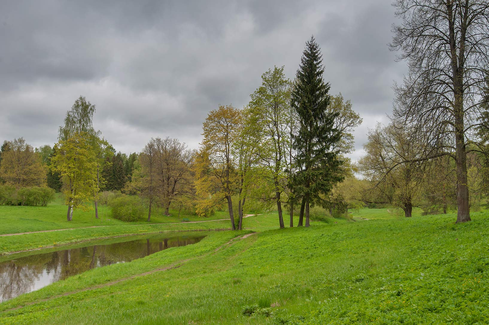 Trees in a valley of Slavianka River in Pavlovsk...suburb of St.Petersburg, Russia