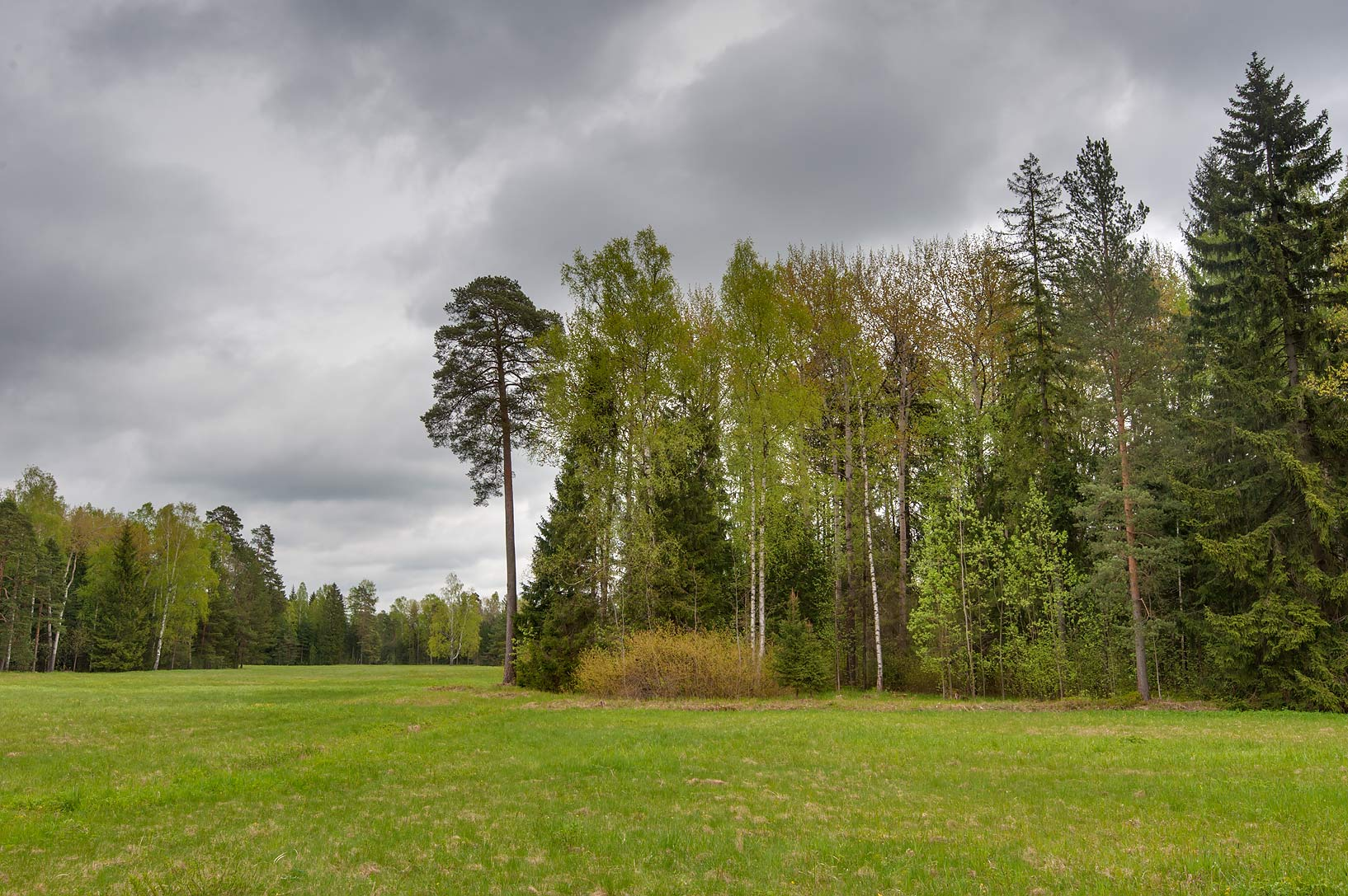 Meadow in area of Old Sylvia in Pavlovsk Park. Pavlovsk, suburb of St.Petersburg, Russia