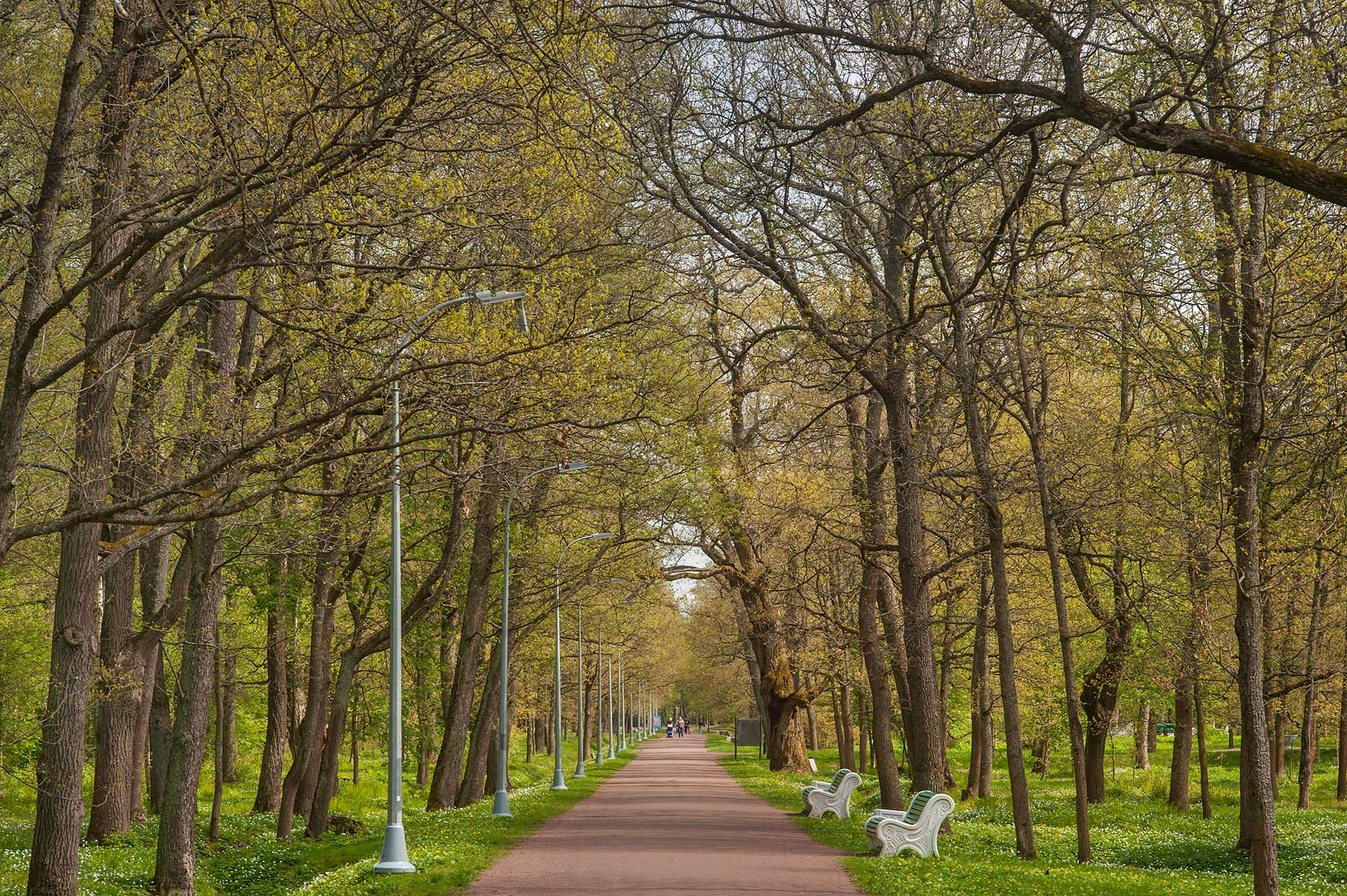 Oak alley in Dubki Park. Sestroretsk, a suburb of St.Petersburg, Russia