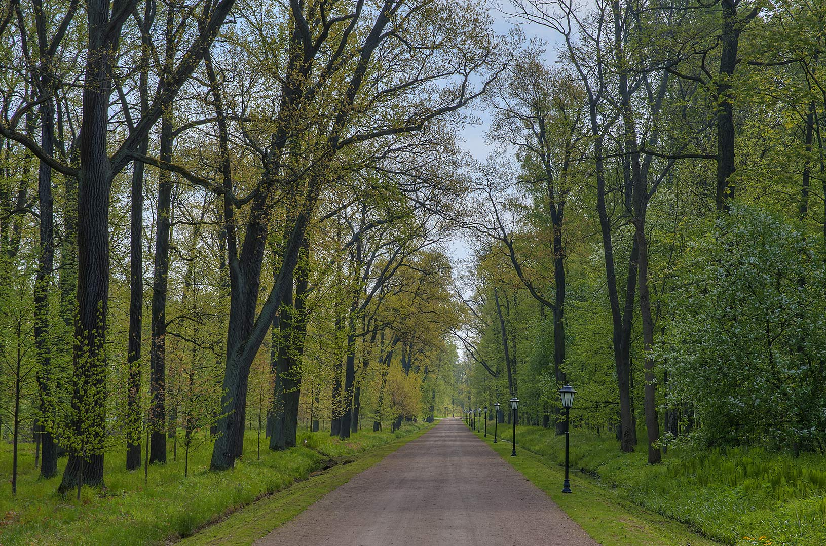 Oak alley in Alexandria Park in Peterhof, west from St.Petersburg. Russia