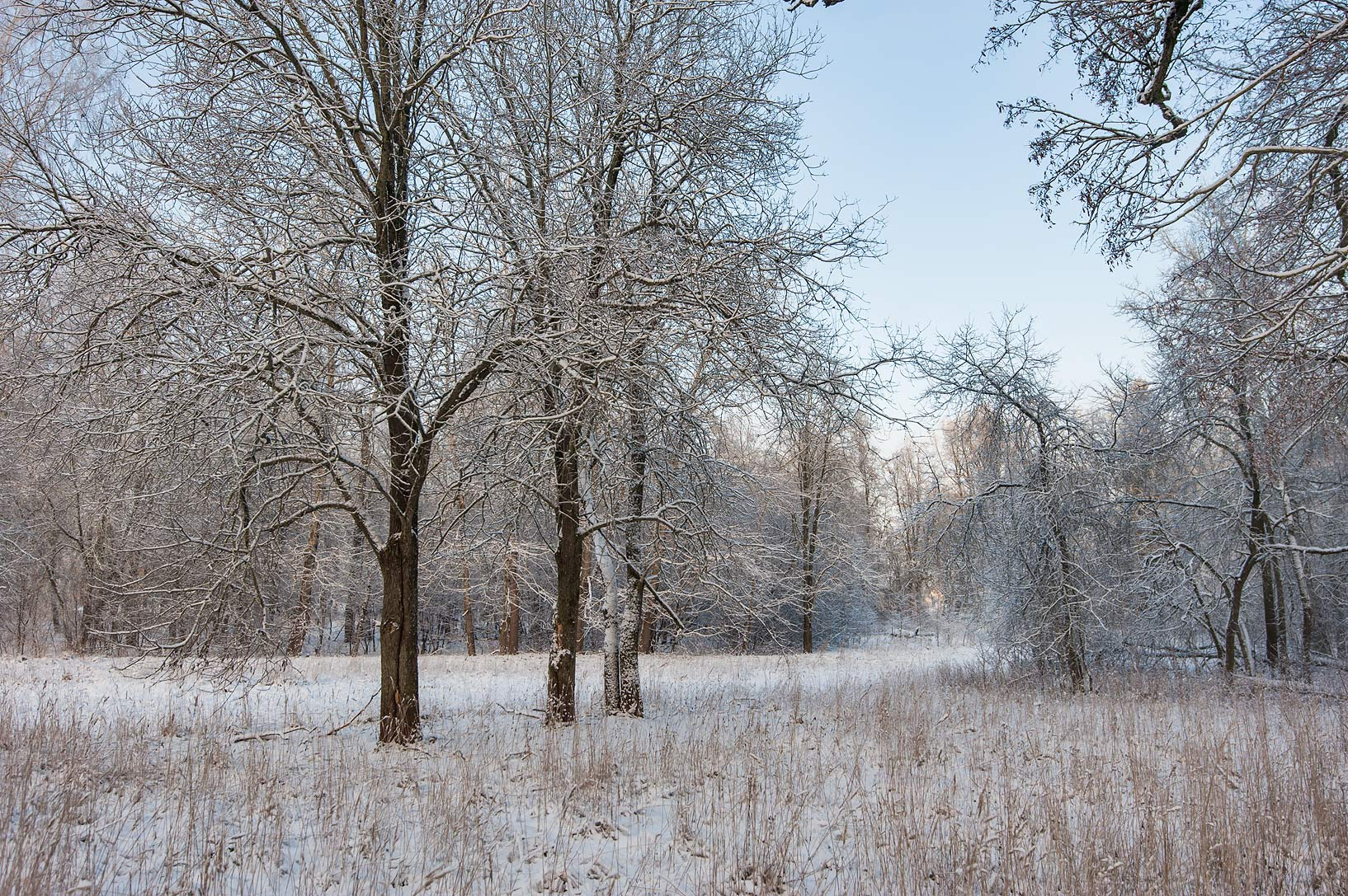 Snowy forest in Rozhdestveno Village. Gatchina District of Leningrad Region, Russia
