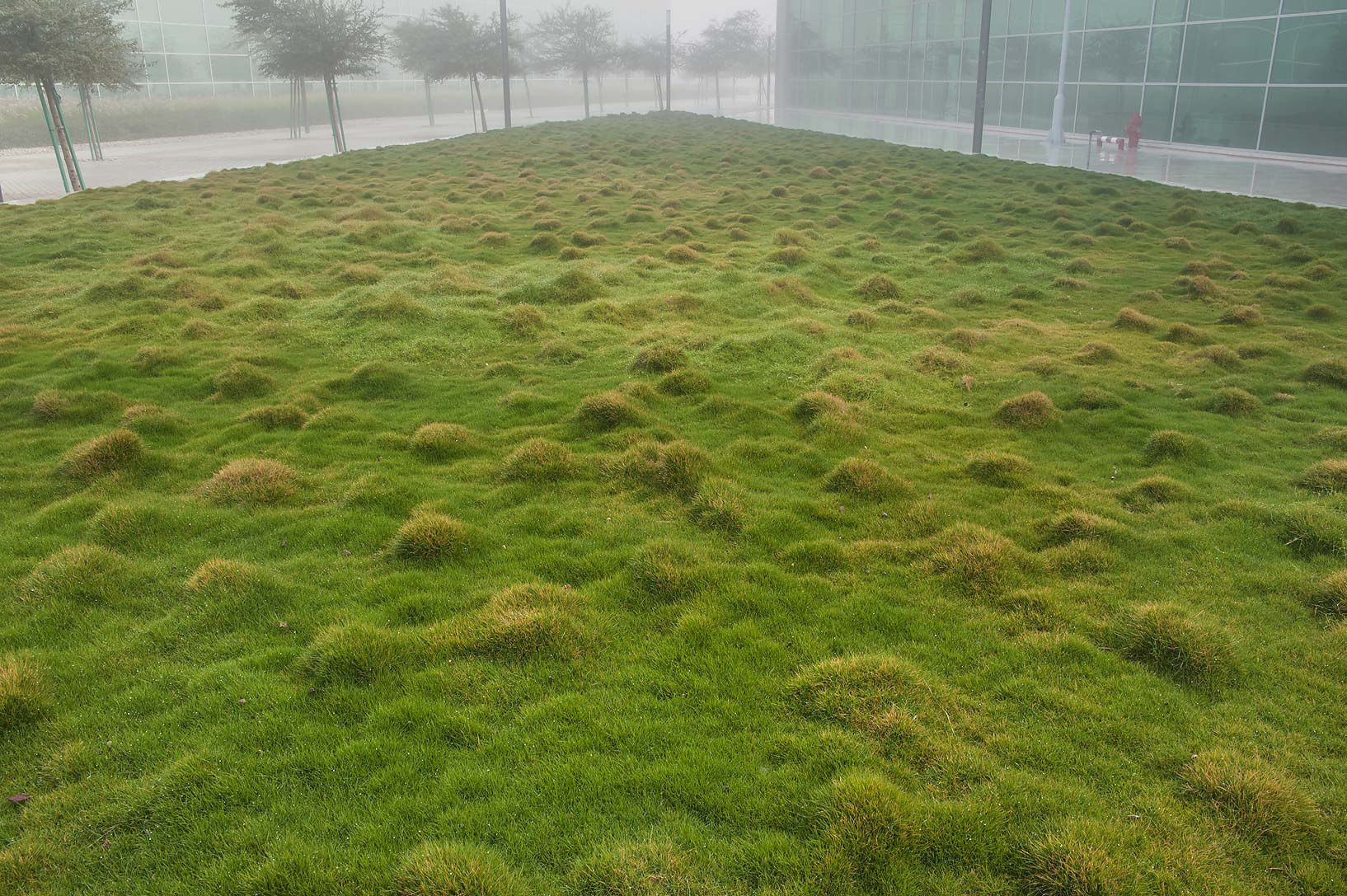 Grassy triangle with Korean velvet grass (Zoysia...Complex in Education City. Doha, Qatar