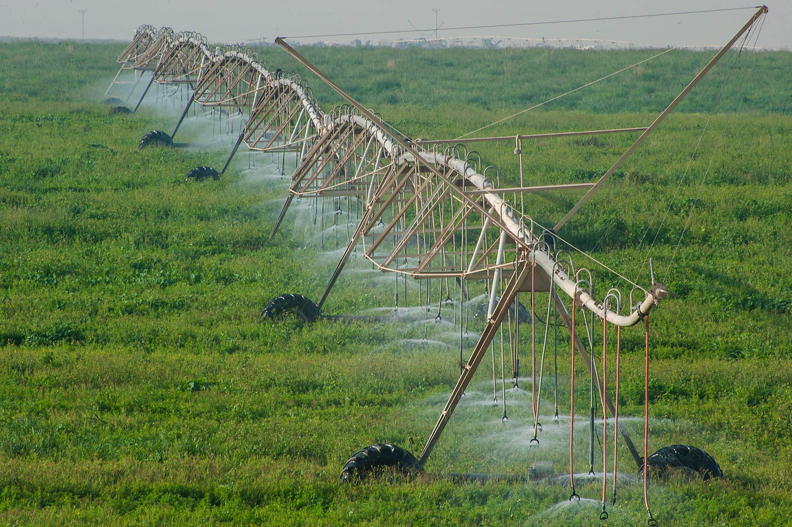 Segments of pipes with water sprinkles on Green...Irkaya) Farms. South-western Qatar
