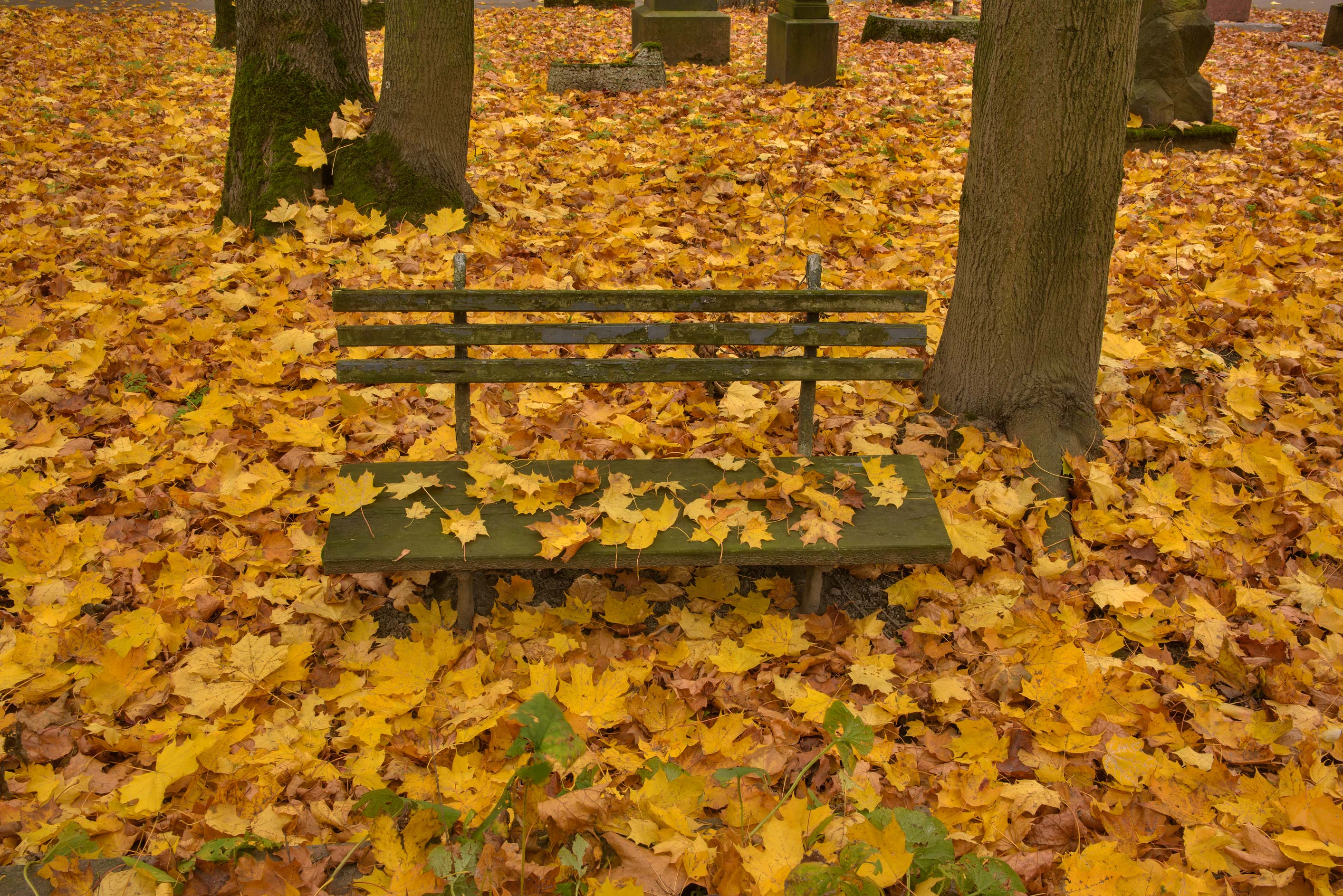 Tomb bench with maple leaves in Literatorskie...Cemetery. St.Petersburg, Russia