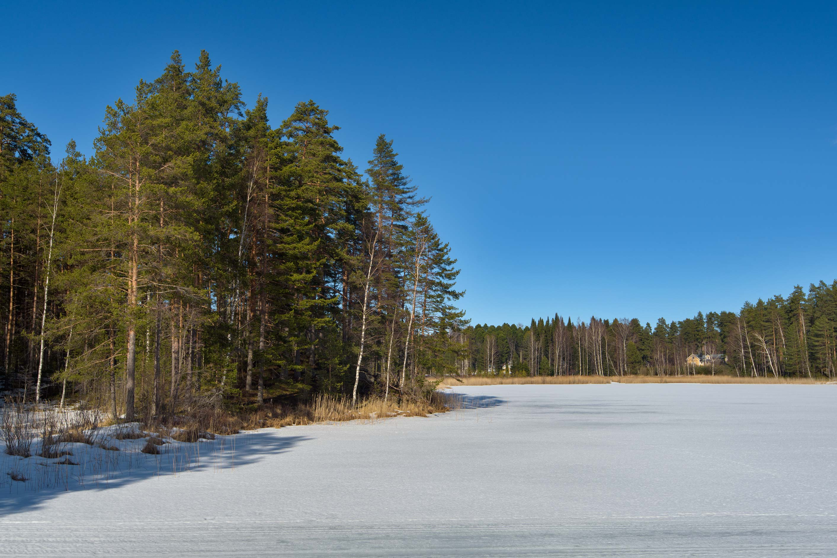 Forest and a lake from Kissing Bridge on Punkaharju Island. Lusto, Finland