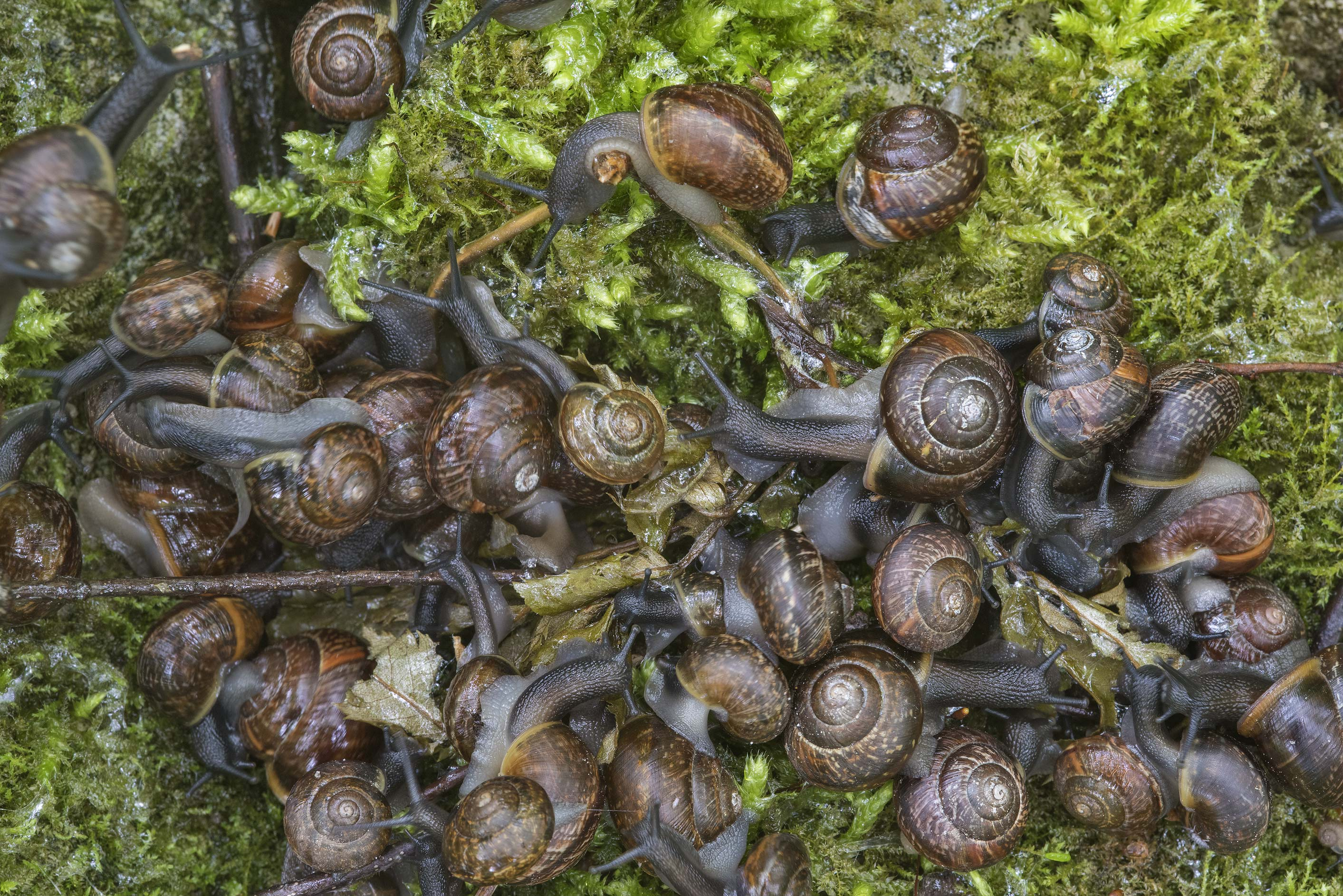 Snail's party near Lisiy Nos, west from St.Petersburg. Russia