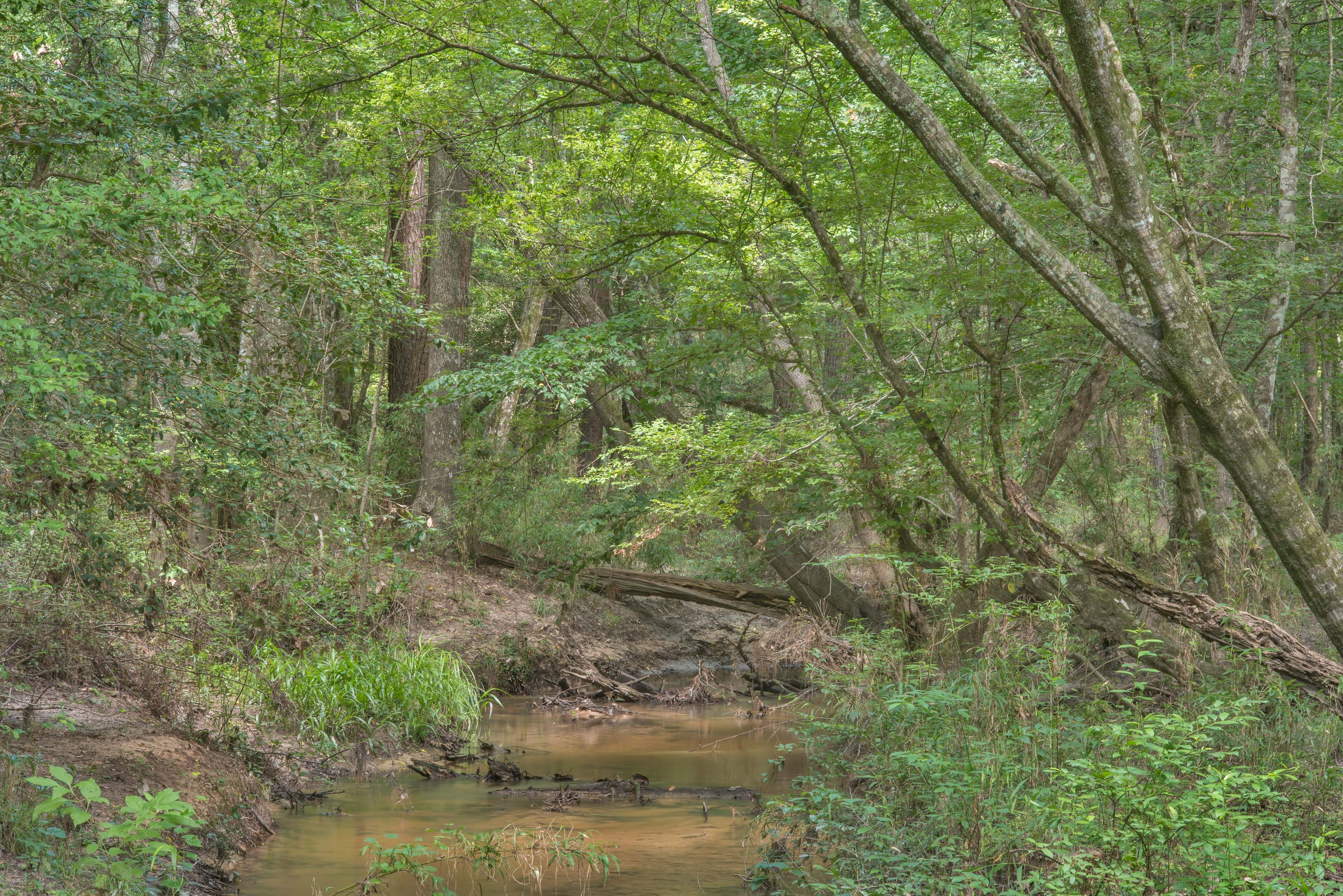 A creek in Big Creek Scenic Area of Sam Houston National Forest. Shepherd, Texas