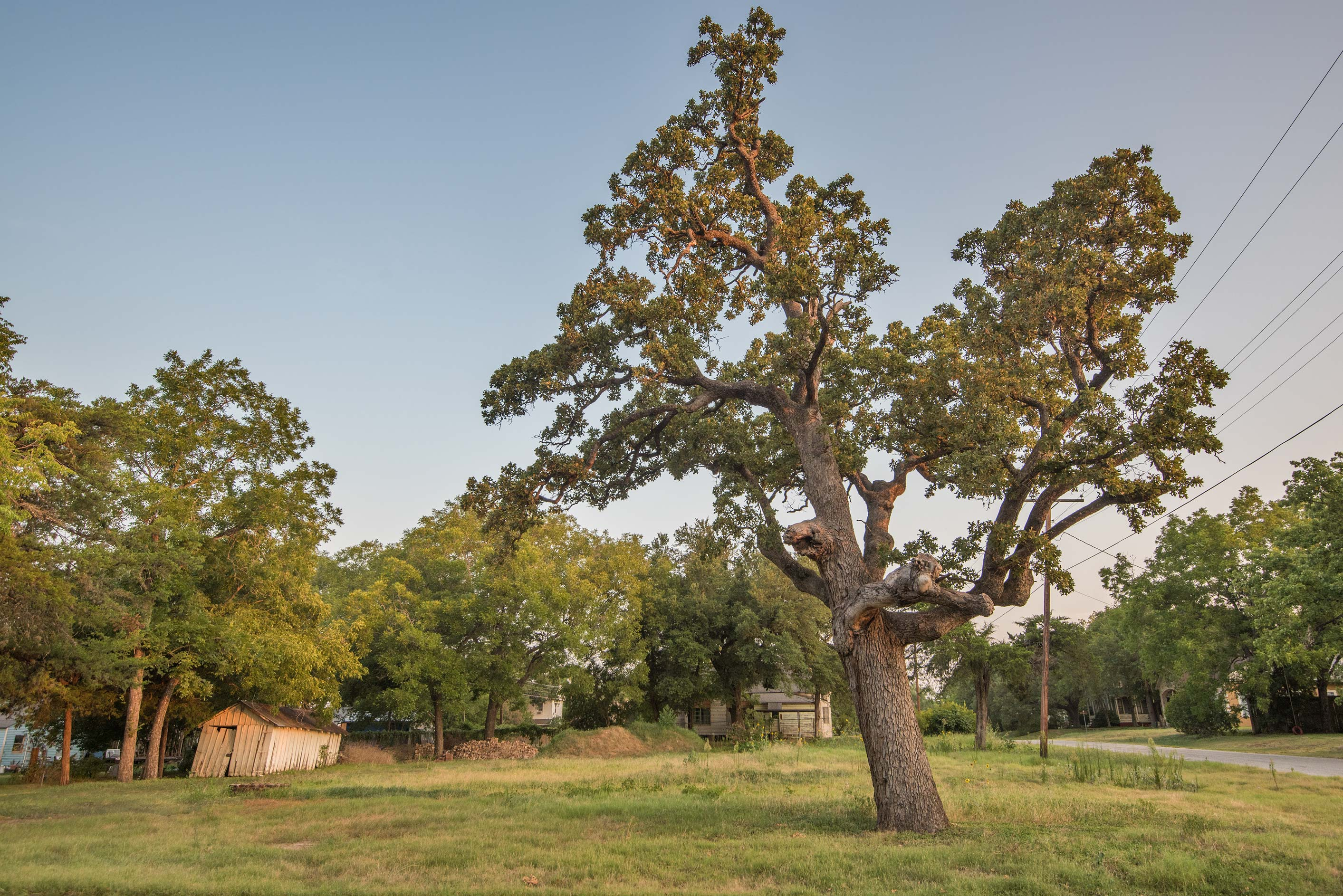 Old oak and a water cistern (in front of a barn...a corner of Pine St.. Calvert, Texas